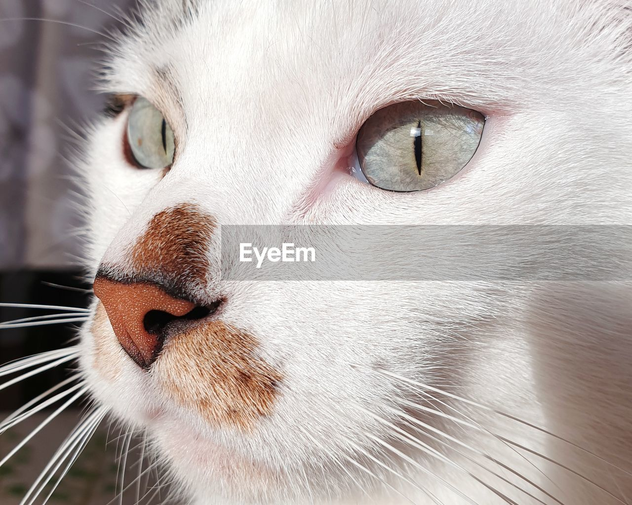 animal, pets, one animal, animal themes, domestic, domestic animals, feline, mammal, cat, close-up, domestic cat, vertebrate, animal body part, whisker, animal head, no people, eye, animal eye, looking, focus on foreground, animal nose, snout