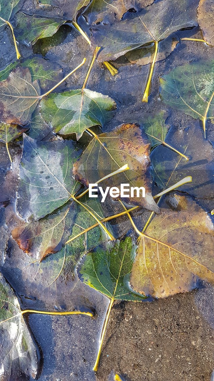 leaf, change, autumn, nature, high angle view, dry, outdoors, no people, day, plant, close-up, beauty in nature, growth, fragility, maple
