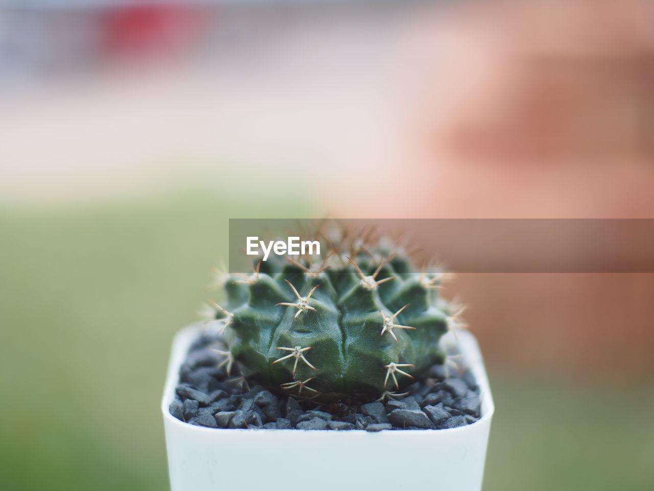 Close-Up Of Cactus Plant At Yard