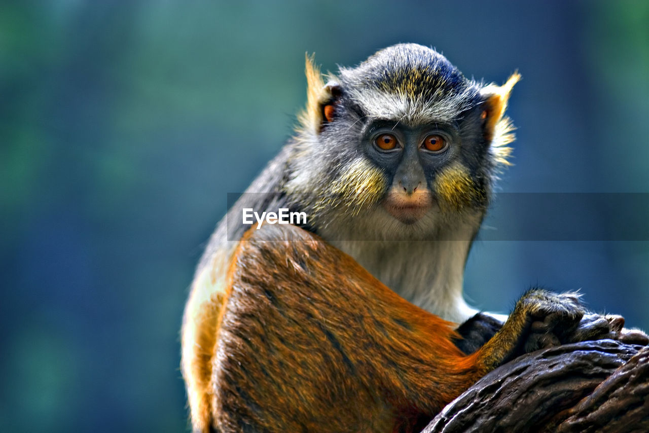 animals in the wild, one animal, animal wildlife, animal themes, no people, mammal, focus on foreground, monkey, outdoors, day, close-up, nature