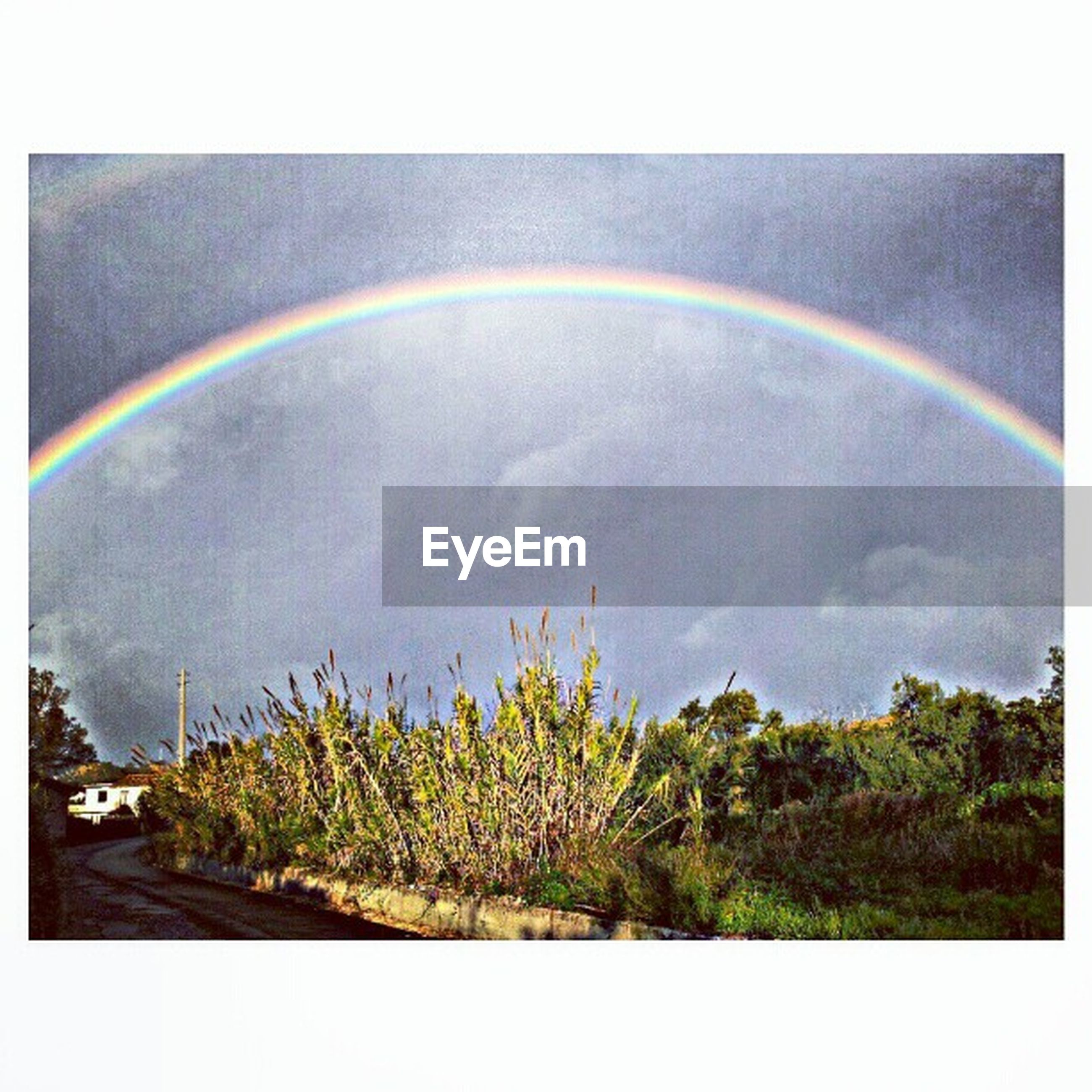 transfer print, auto post production filter, rainbow, sky, tree, multi colored, beauty in nature, scenics, nature, cloud - sky, tranquility, green color, tranquil scene, panoramic, growth, idyllic, cloud, cloudy, outdoors, no people