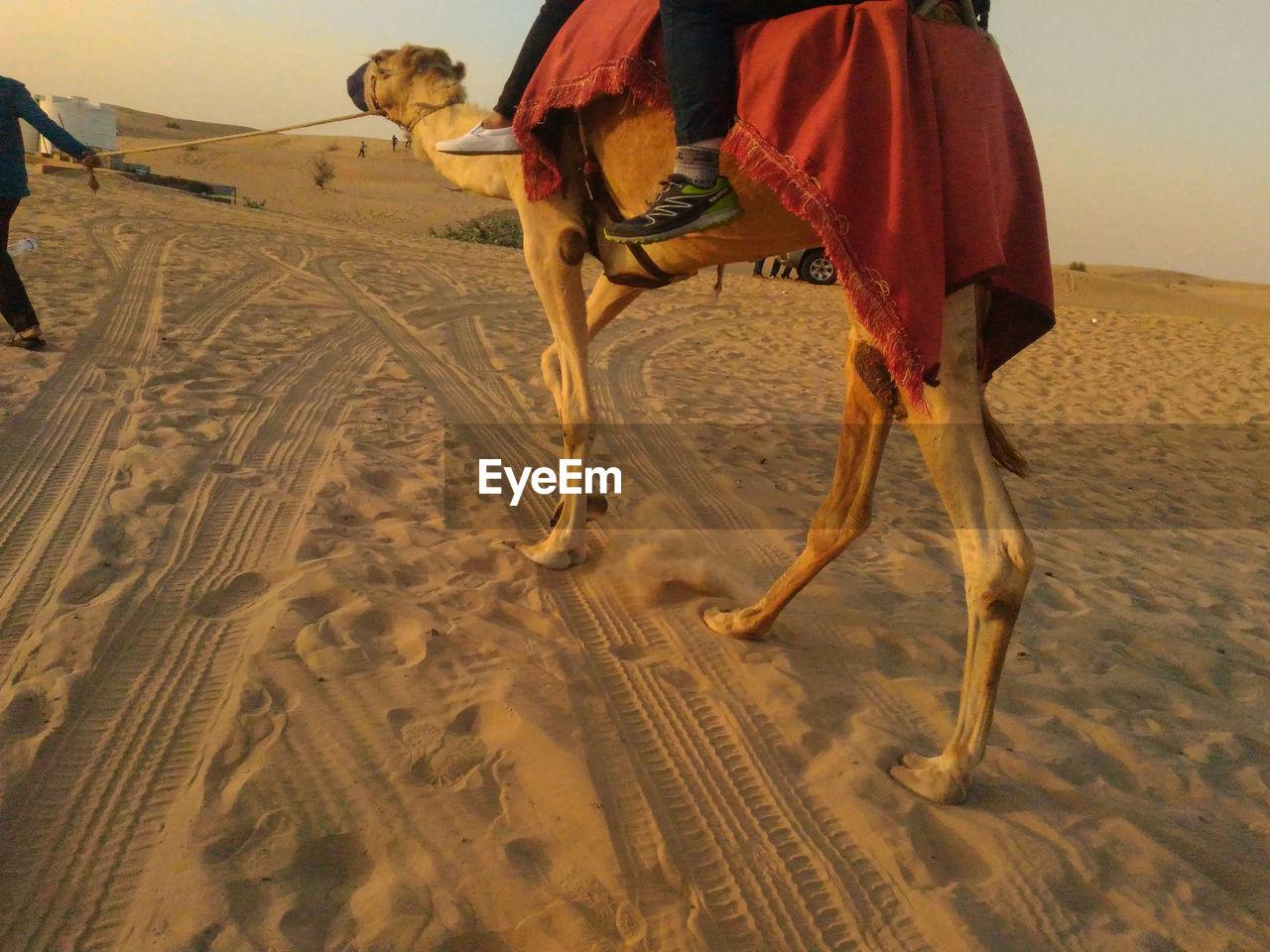 HORSE RIDING IN DESERT
