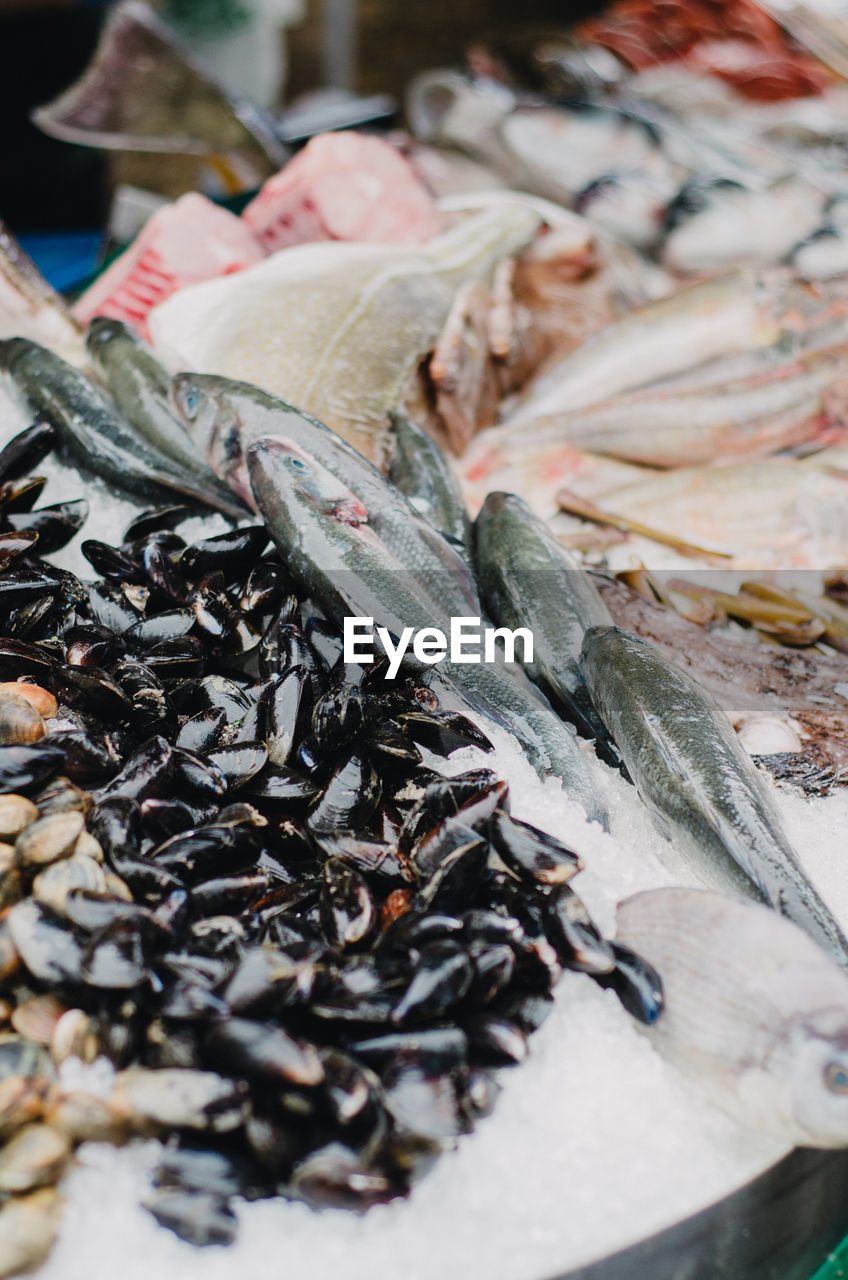 High Angle View Of Fresh Seafood At Fish Market