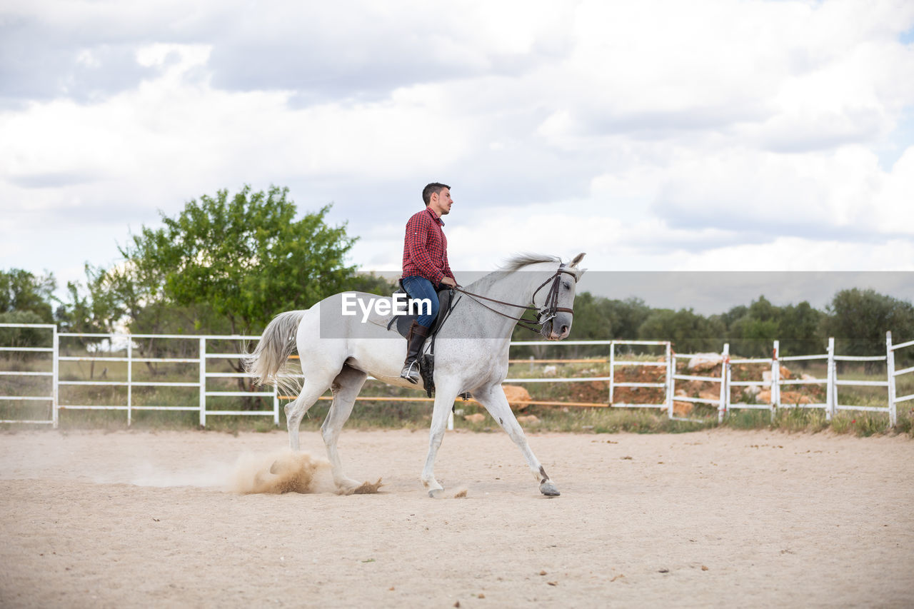 VIEW OF HORSE RIDING HORSES ON LANDSCAPE