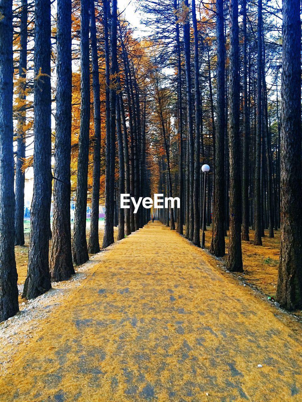 Treelined along footpath in park