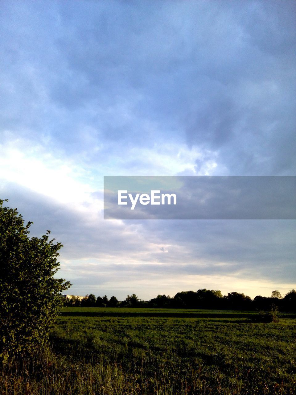 sky, cloud - sky, environment, landscape, beauty in nature, plant, tranquility, scenics - nature, field, land, tranquil scene, nature, no people, tree, agriculture, rural scene, day, growth, non-urban scene, grass, outdoors