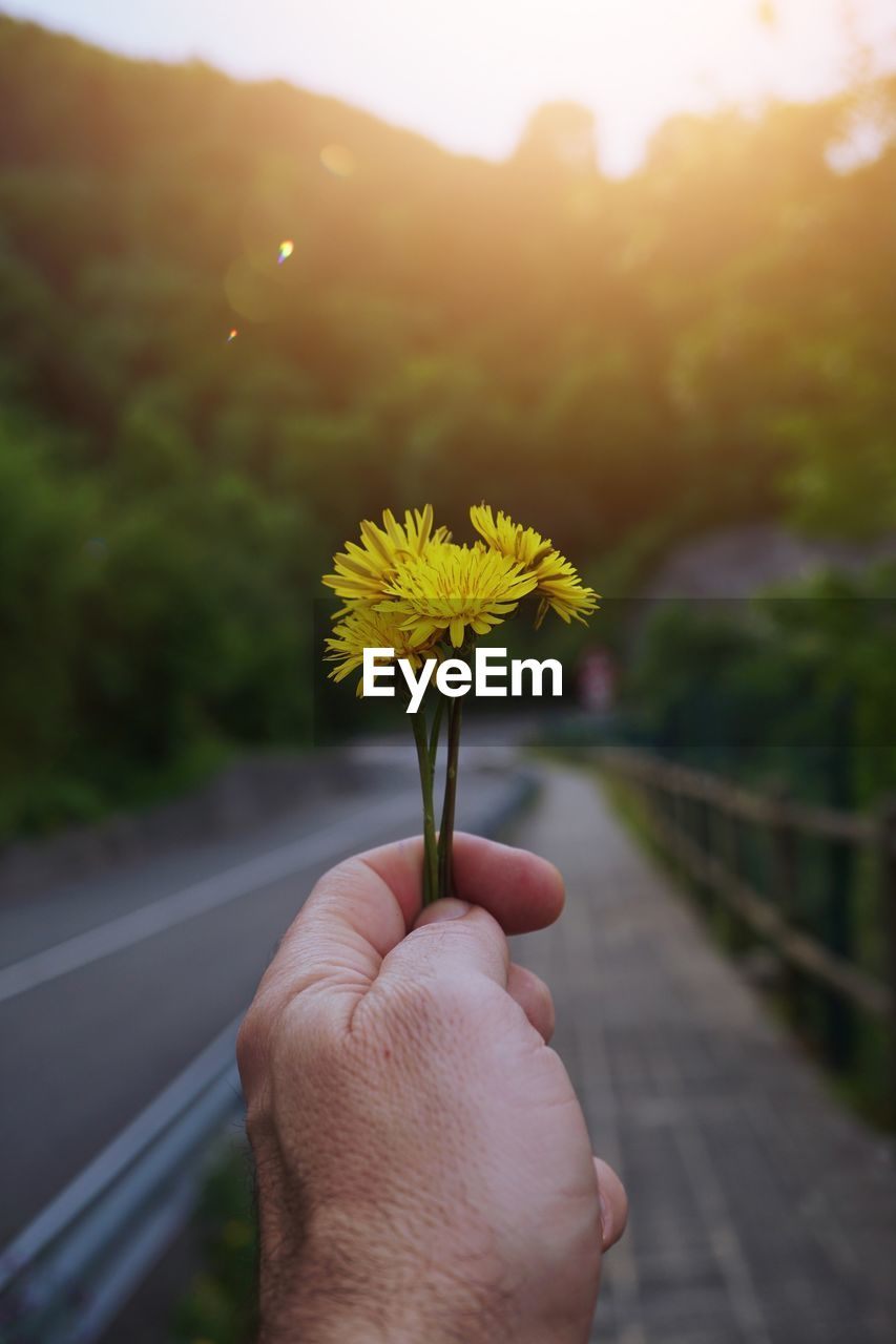 human hand, hand, flower, plant, human body part, flowering plant, one person, real people, holding, fragility, freshness, nature, focus on foreground, yellow, vulnerability, personal perspective, beauty in nature, lifestyles, finger, human finger, body part, outdoors, flower head, human limb