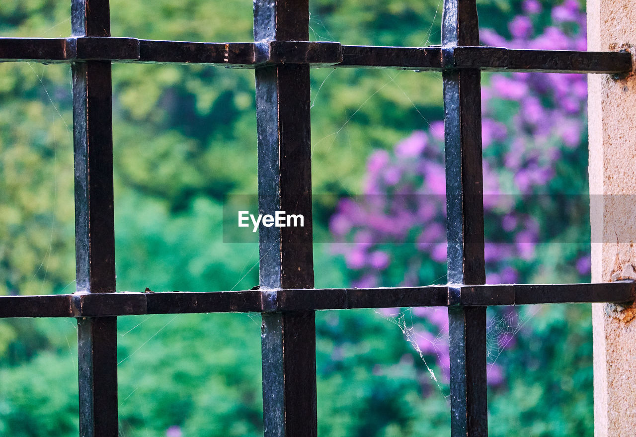 focus on foreground, metal, window, outdoors, day, security, safety, no people, protection, close-up, plant, architecture, grate, grid, fence, barrier, security bar, boundary, nature, metal grate, purple, window frame