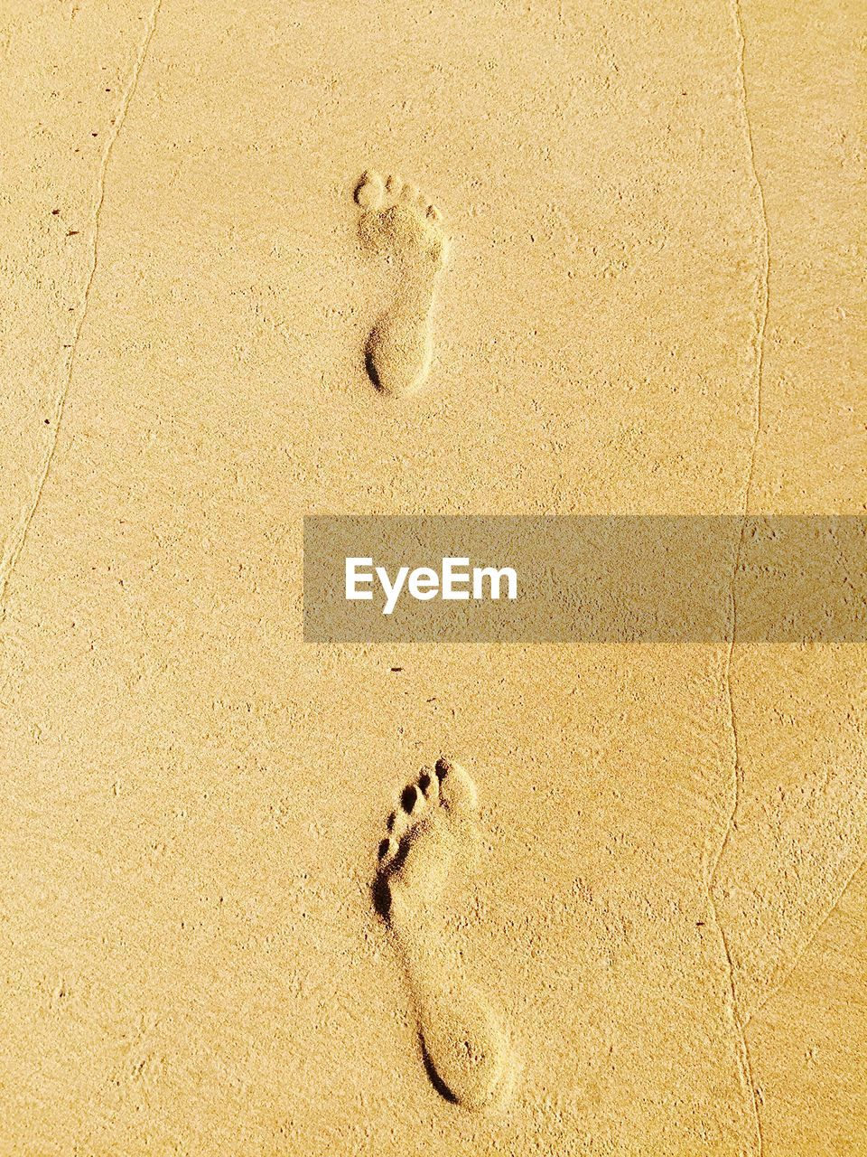 sand, beach, footprint, paw print, track - imprint, high angle view, animal track, day, nature, outdoors, no people, animal themes, dog, animal wildlife, one animal, paw, animals in the wild, mammal