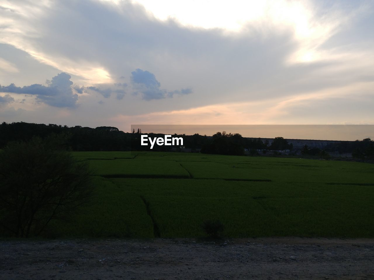 sky, cloud - sky, beauty in nature, environment, landscape, scenics - nature, sunset, tranquil scene, plant, tranquility, green color, field, land, nature, no people, grass, tree, agriculture, rural scene, outdoors