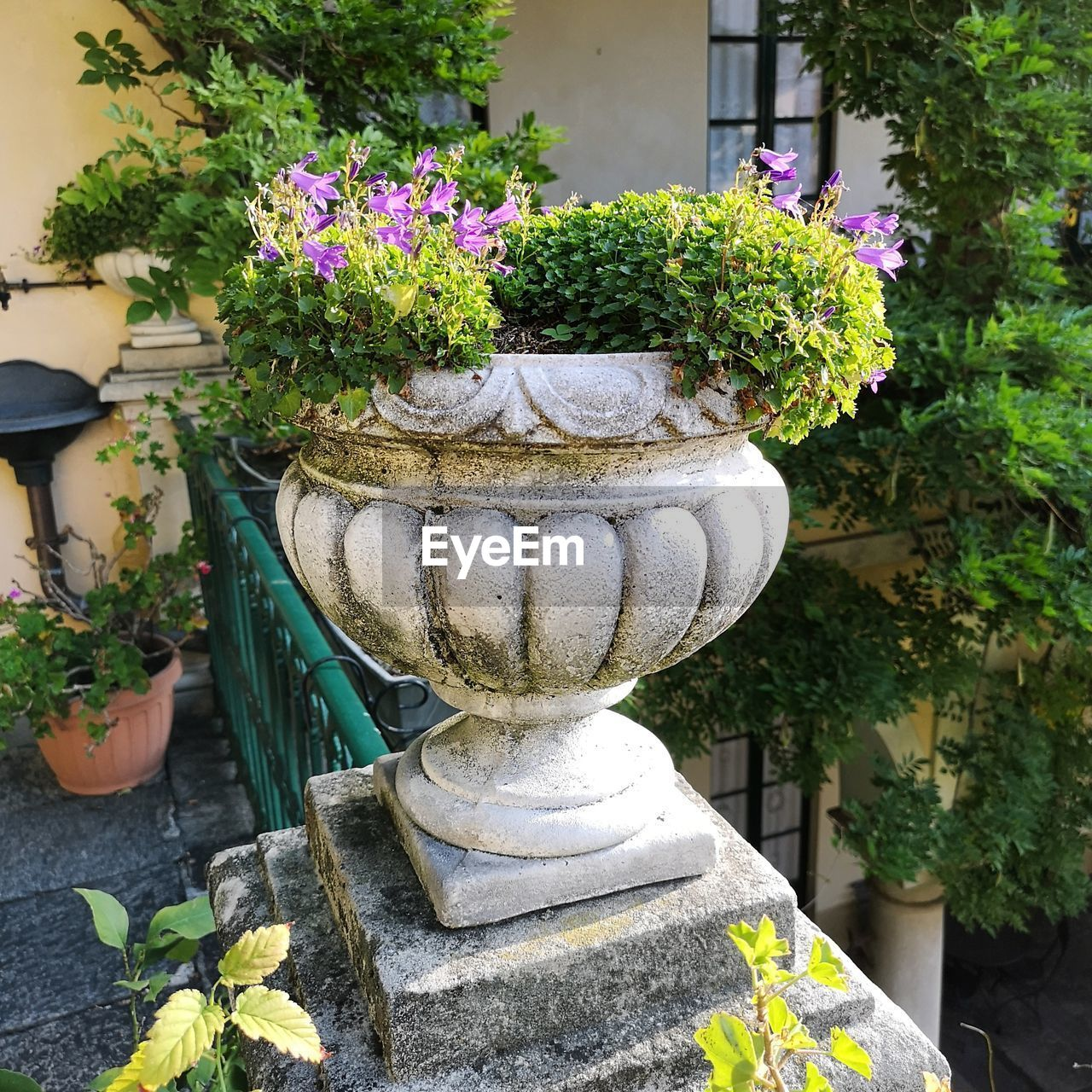 plant, flower, flowering plant, potted plant, nature, growth, day, no people, beauty in nature, garden, outdoors, formal garden, front or back yard, solid, fragility, vulnerability, close-up, green color, architecture, plant part, flower pot