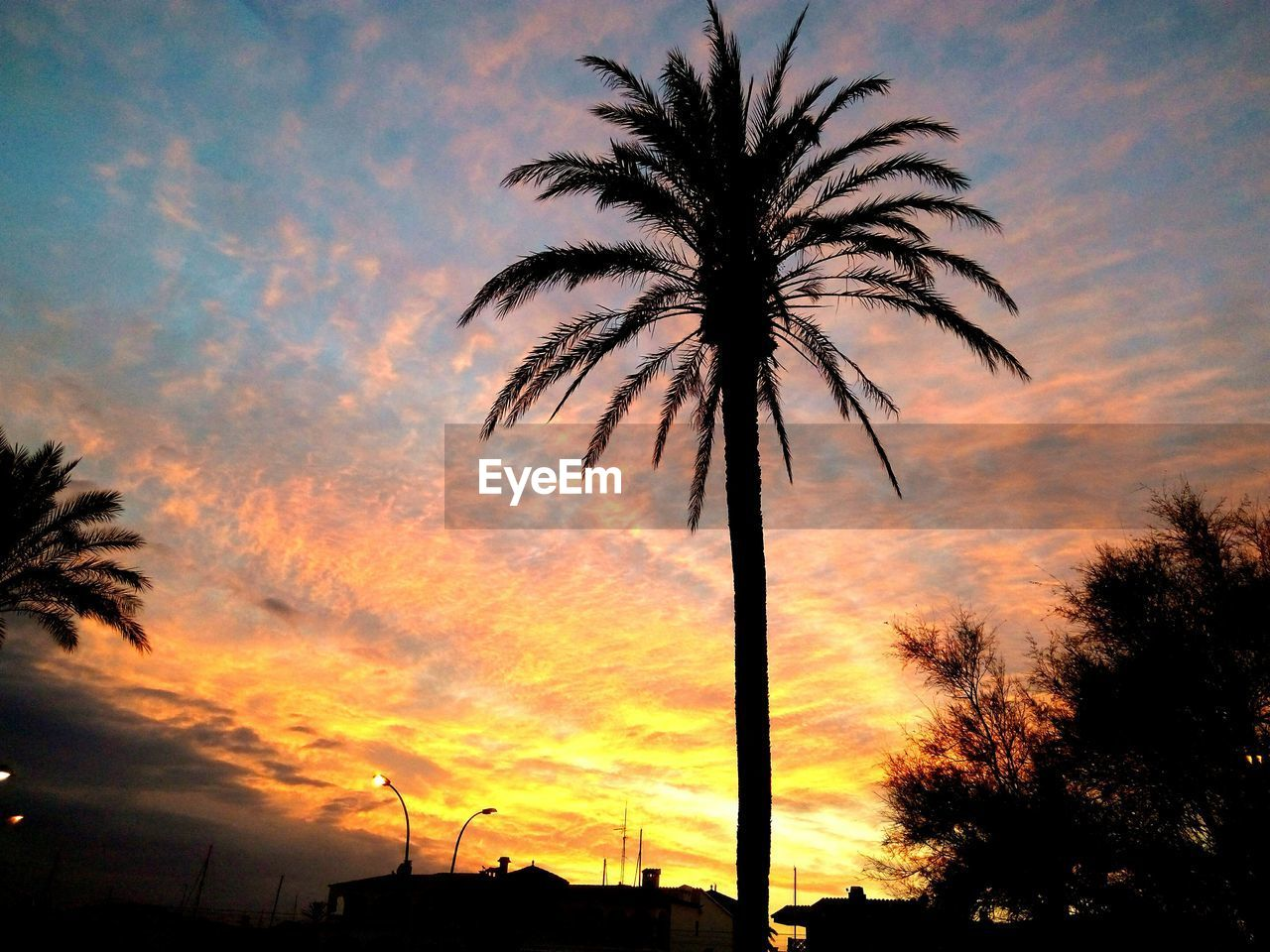 silhouette, sky, sunset, tree, palm tree, tropical climate, cloud - sky, orange color, plant, scenics - nature, beauty in nature, nature, low angle view, no people, tranquility, tranquil scene, outdoors, environment, growth, idyllic, palm leaf, romantic sky
