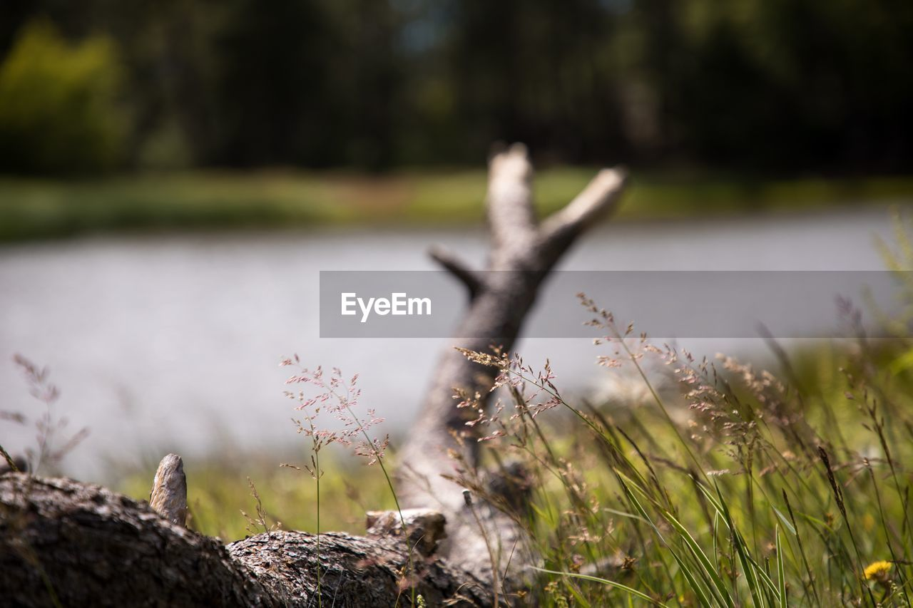 plant, nature, day, growth, focus on foreground, selective focus, no people, land, grass, tree, field, tranquility, outdoors, close-up, sunlight, wood - material, green color, beauty in nature, water, tranquil scene