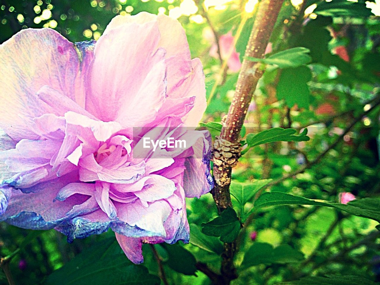 flower, nature, beauty in nature, plant, outdoors, growth, petal, day, flower head, fragility, no people, close-up, freshness