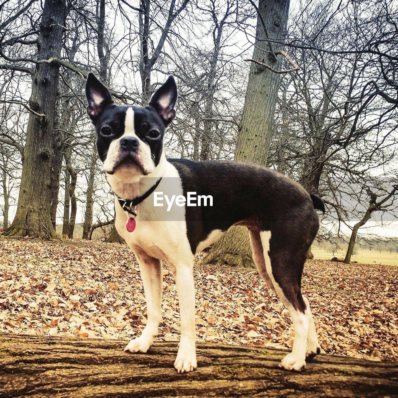 PORTRAIT OF DOG WALKING ON LANDSCAPE