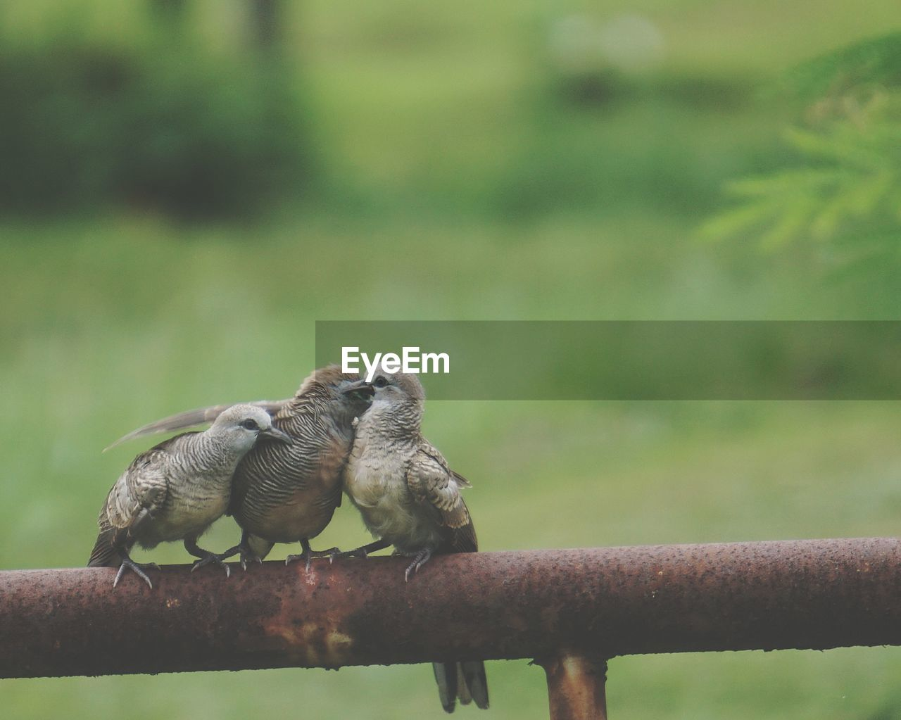 animal themes, animal wildlife, animal, animals in the wild, focus on foreground, day, vertebrate, no people, nature, group of animals, railing, metal, two animals, bird, outdoors, togetherness, boundary, full length, close-up, fence