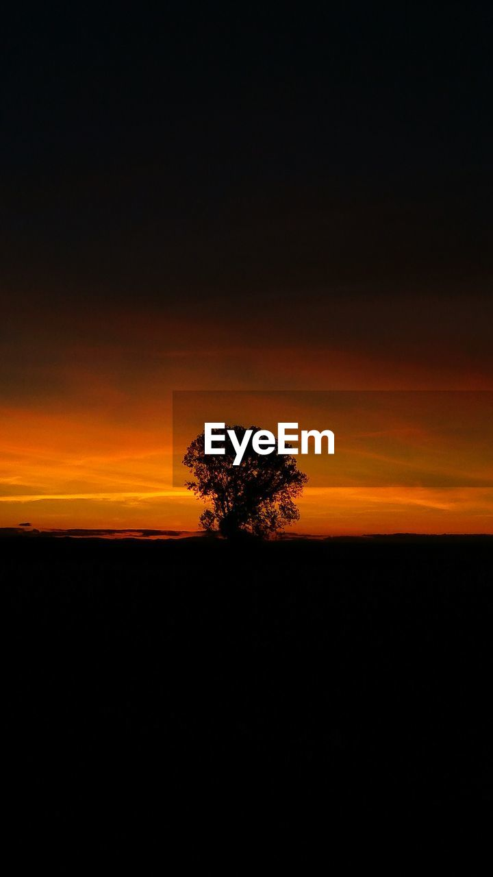 SILHOUETTE TREES ON FIELD AT SUNSET