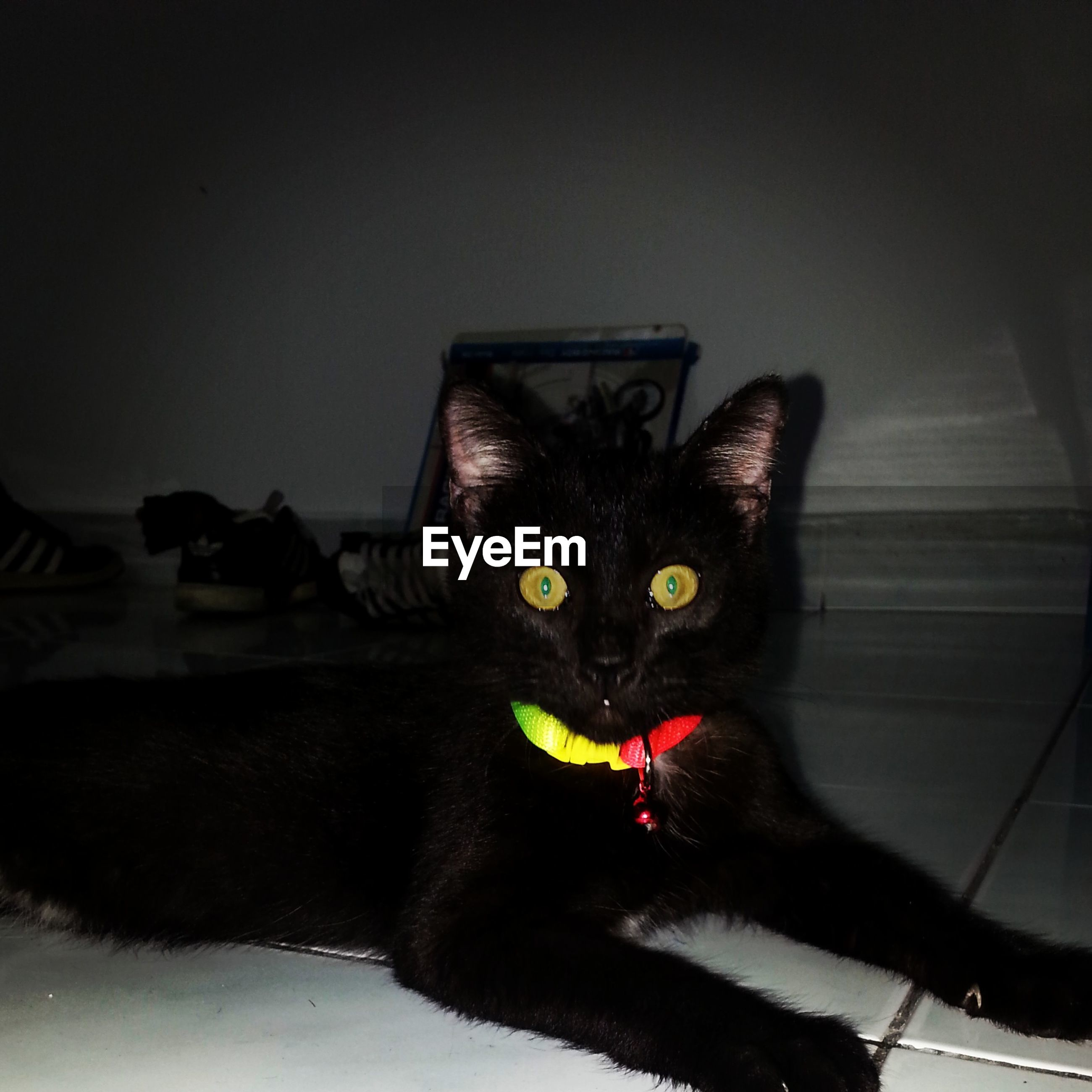 Portrait of black cat with glowing yellow eyes