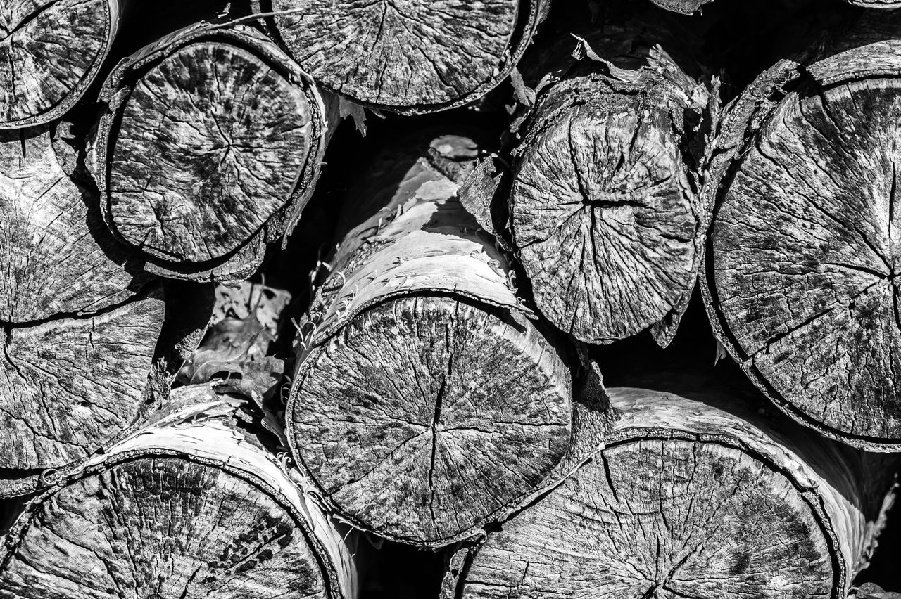 full frame, backgrounds, log, timber, close-up, firewood, stack, lumber industry, no people, wood, large group of objects, shape, tree, wood - material, fuel and power generation, circle, deforestation, abundance, geometric shape, pattern, woodpile, outdoors