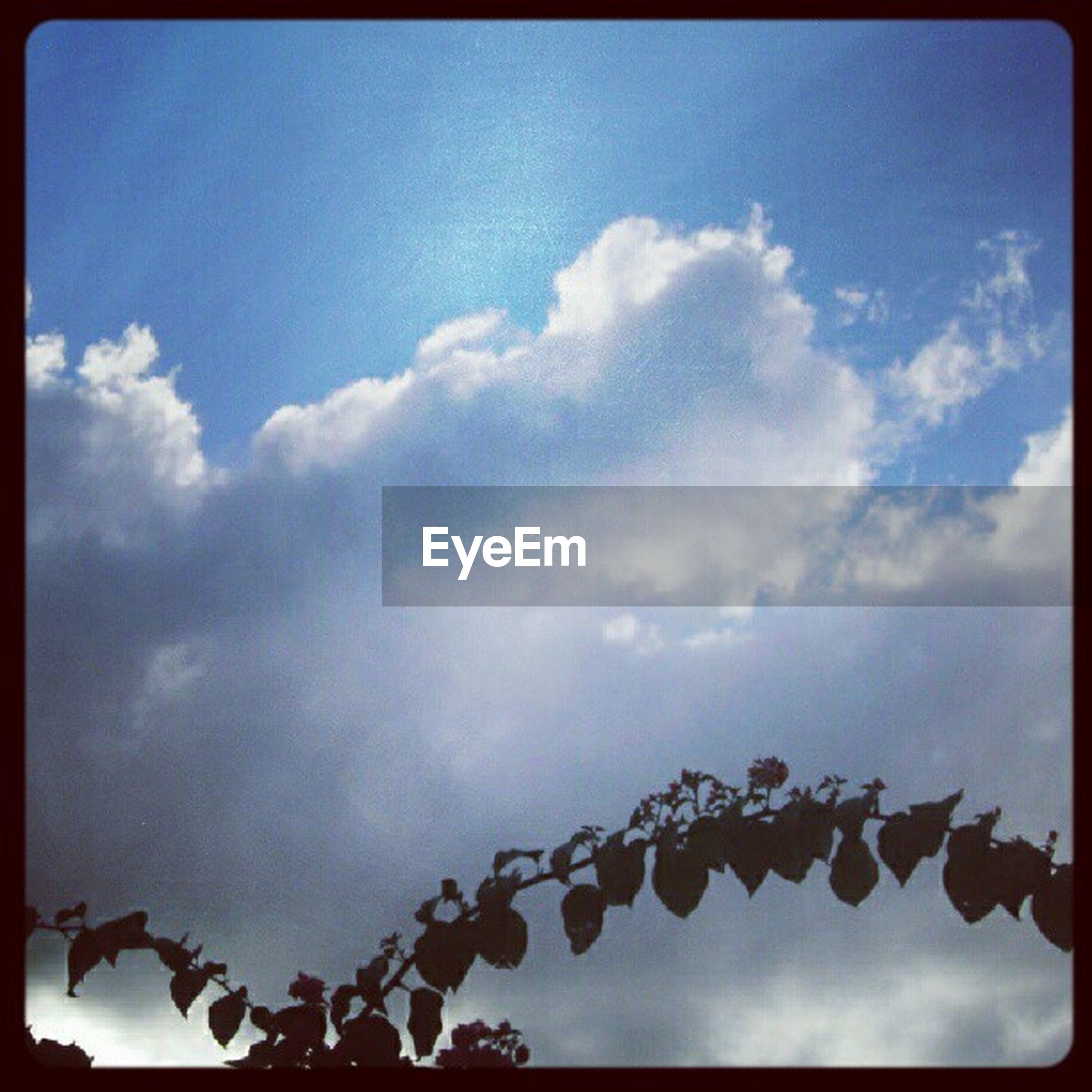 low angle view, sky, transfer print, auto post production filter, cloud - sky, cloud, nature, hanging, day, outdoors, no people, blue, cloudy, beauty in nature, growth, tranquility, close-up, decoration, high section, in a row