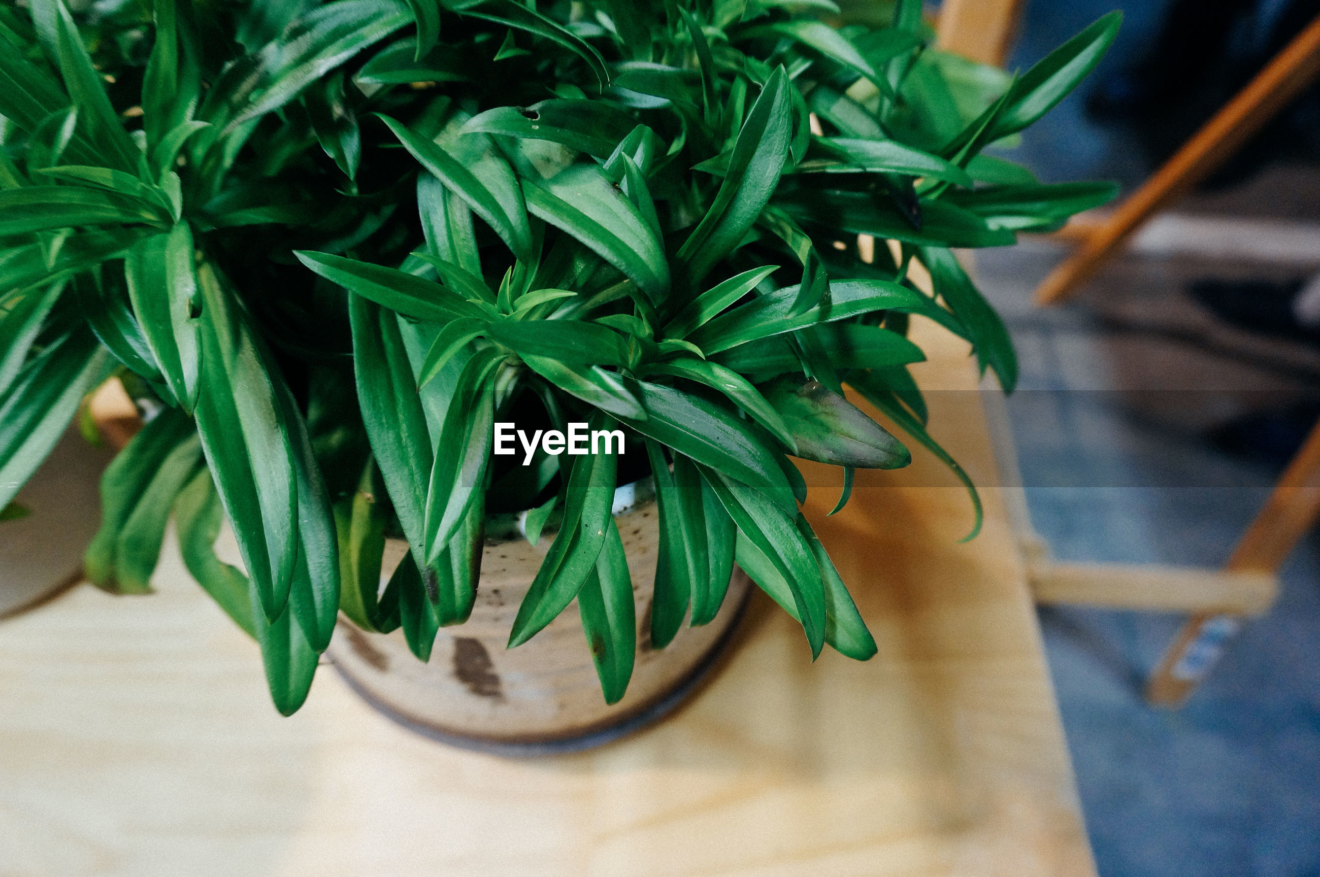 High angle close-up of potted plant on wooden table