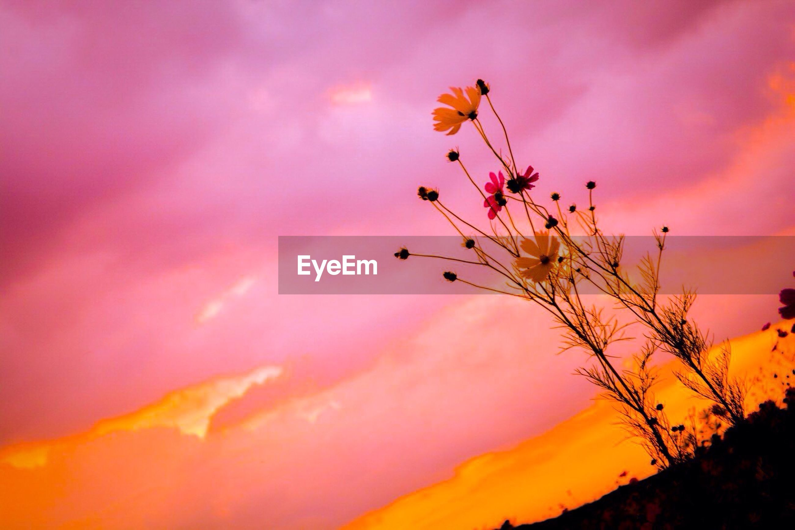 Wildflowers against purple sky