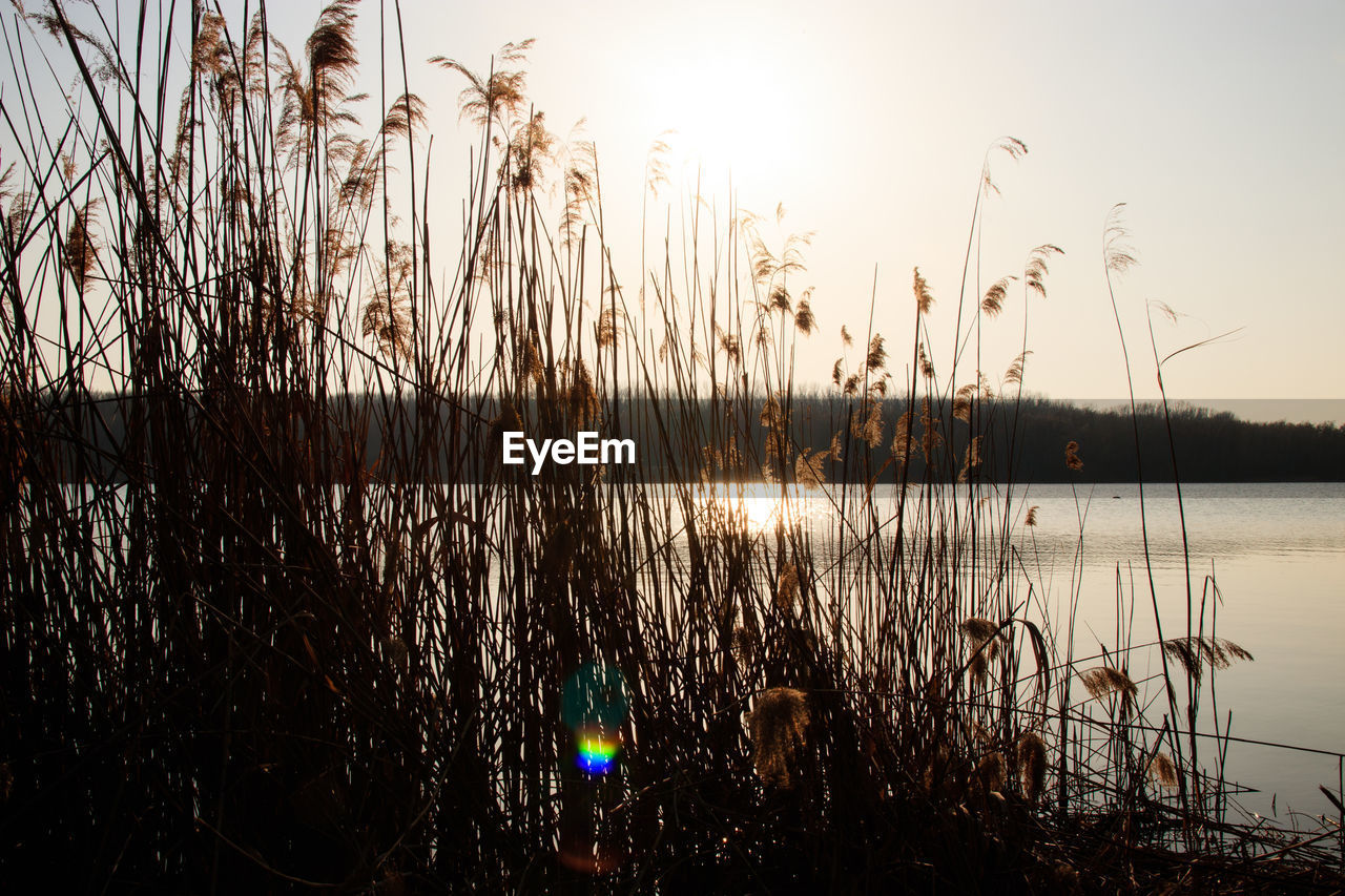 water, sky, tranquility, lake, plant, beauty in nature, tranquil scene, nature, no people, scenics - nature, growth, reflection, grass, sunset, non-urban scene, sunlight, outdoors, sun, clear sky, timothy grass