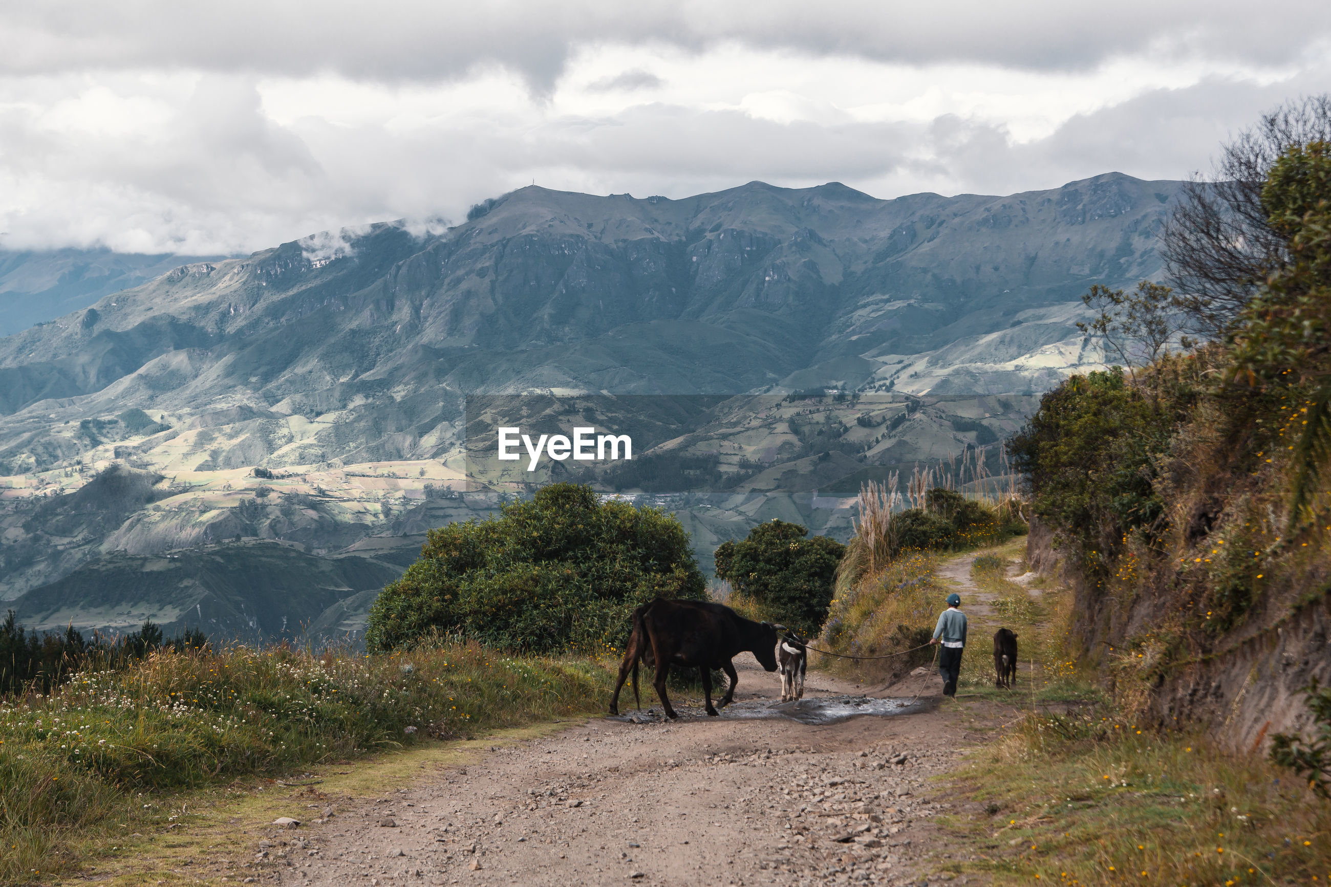 VIEW OF HORSES ON MOUNTAIN LANDSCAPE