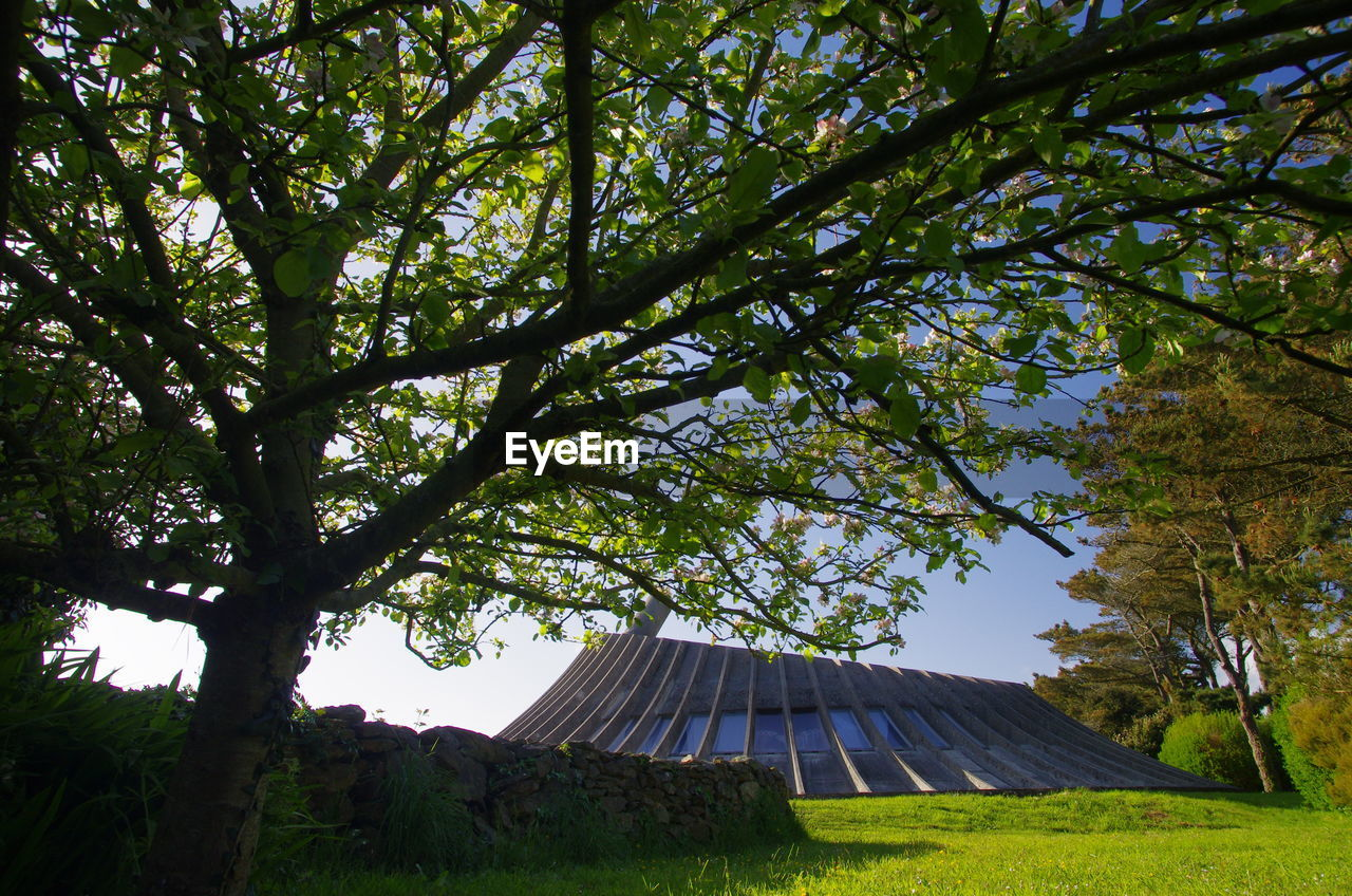 tree, plant, sky, nature, no people, day, land, tranquility, growth, beauty in nature, low angle view, roof, outdoors, architecture, branch, built structure, tranquil scene, sunlight, scenics - nature, field