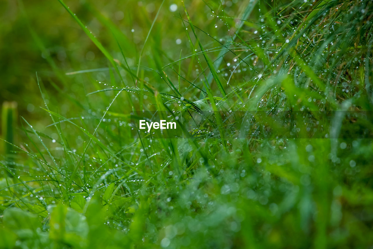 plant, green color, growth, selective focus, beauty in nature, drop, nature, water, full frame, wet, close-up, no people, leaf, freshness, plant part, day, backgrounds, fragility, rain, outdoors, dew, raindrop, blade of grass