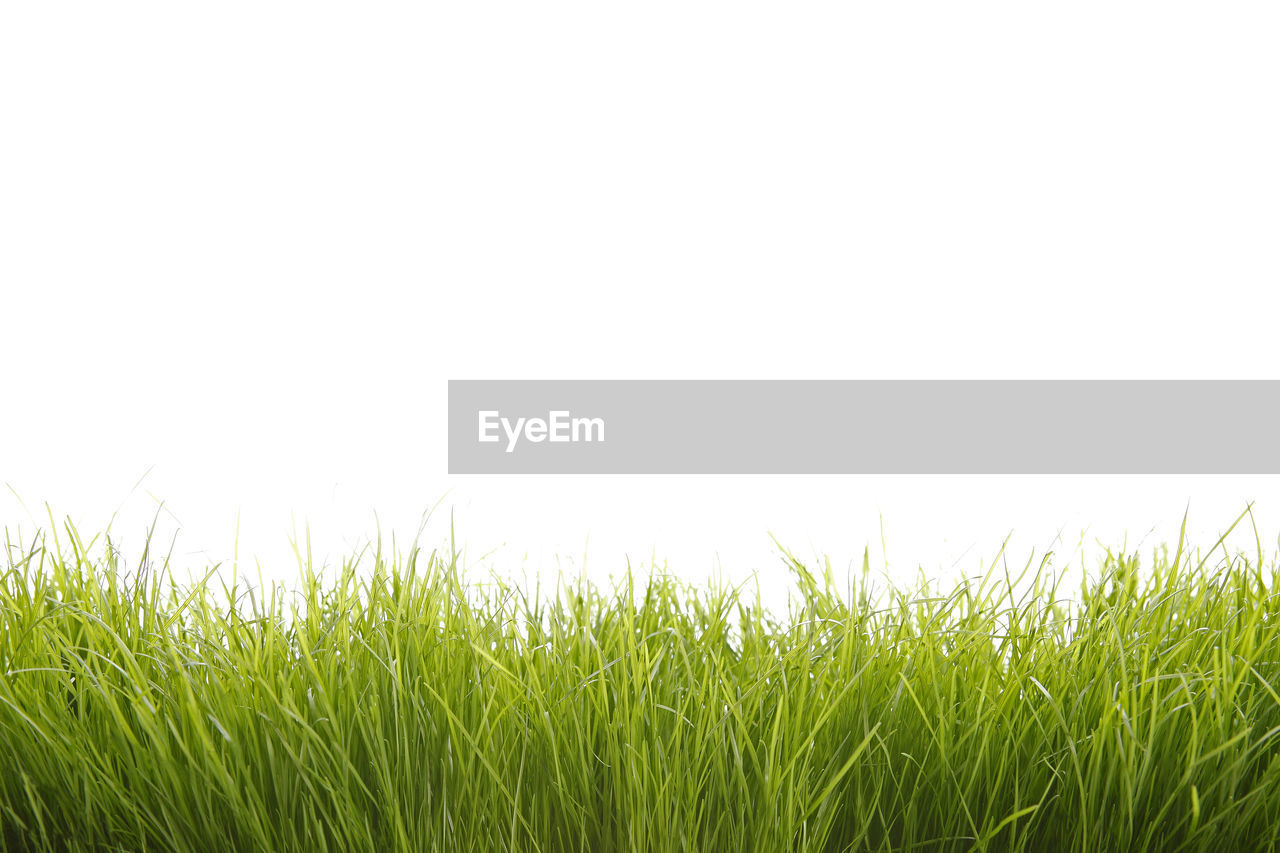 grass, field, nature, meadow, growth, outdoors, green color, backgrounds, lawn, no people, grass area, clear sky, day, beauty in nature, close-up, scenics, sky, freshness