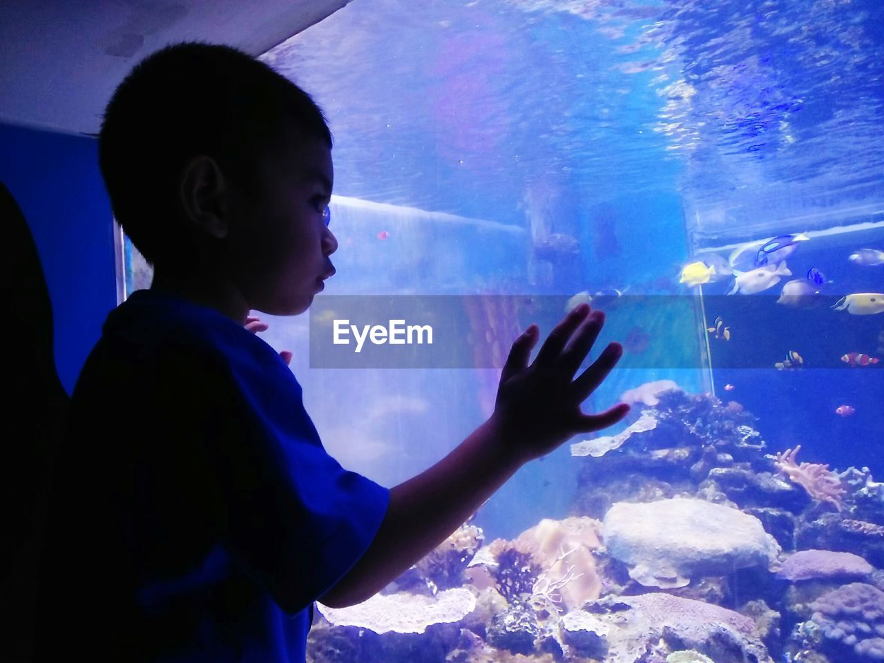 Boy swimming in fish tank at aquarium