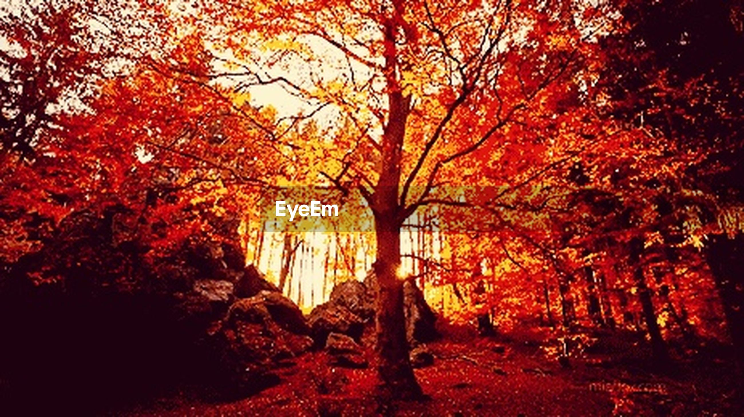 autumn, tree, change, season, forest, orange color, tranquility, beauty in nature, scenics, tranquil scene, nature, branch, non-urban scene, growth, woodland, day, outdoors, no people, non urban scene, vibrant color