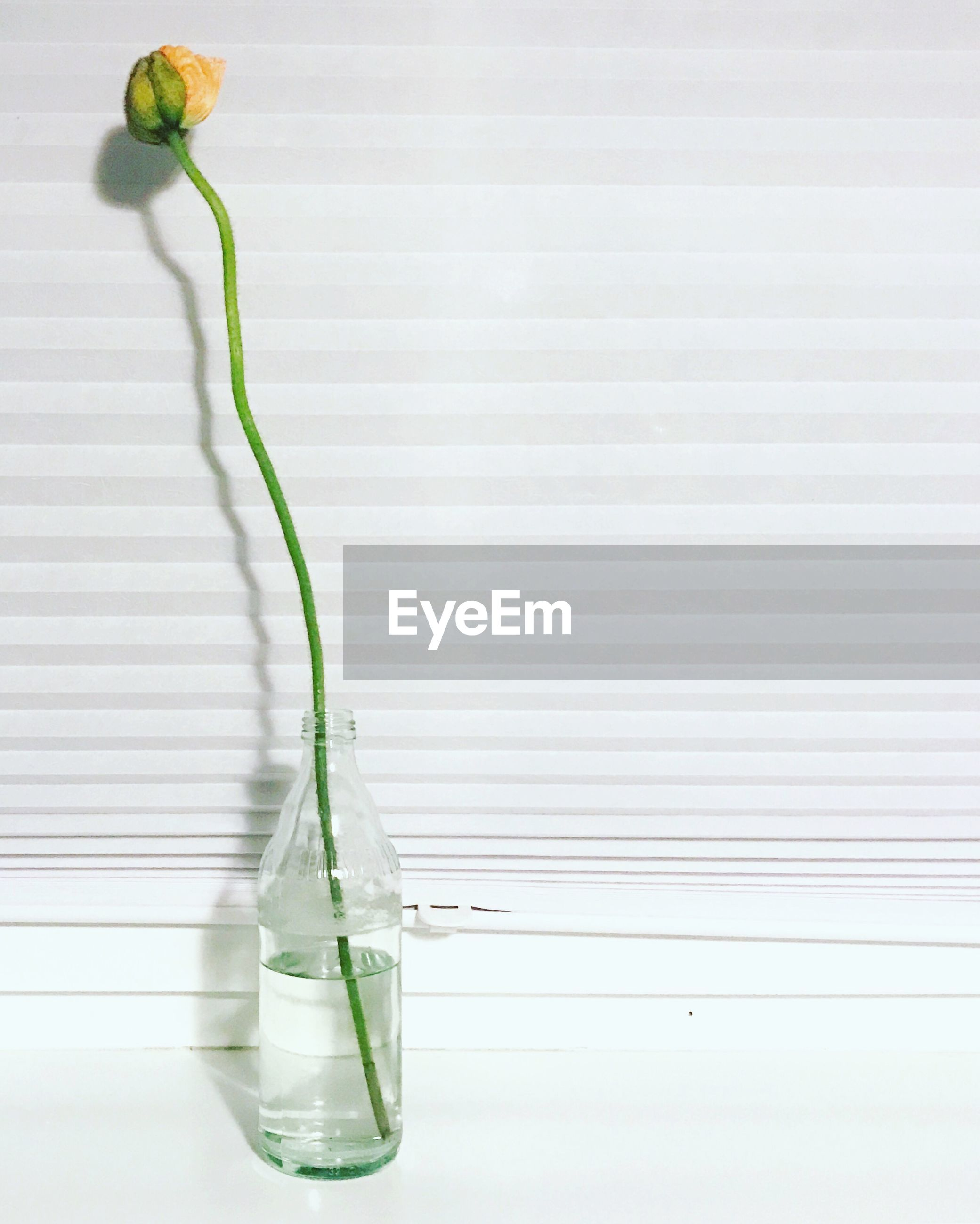 Flower in glass bottle against window