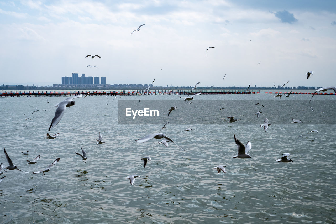 animals in the wild, animal, animal themes, animal wildlife, group of animals, vertebrate, bird, large group of animals, water, flying, sky, sea, waterfront, flock of birds, seagull, nature, spread wings, day, cloud - sky, no people, outdoors
