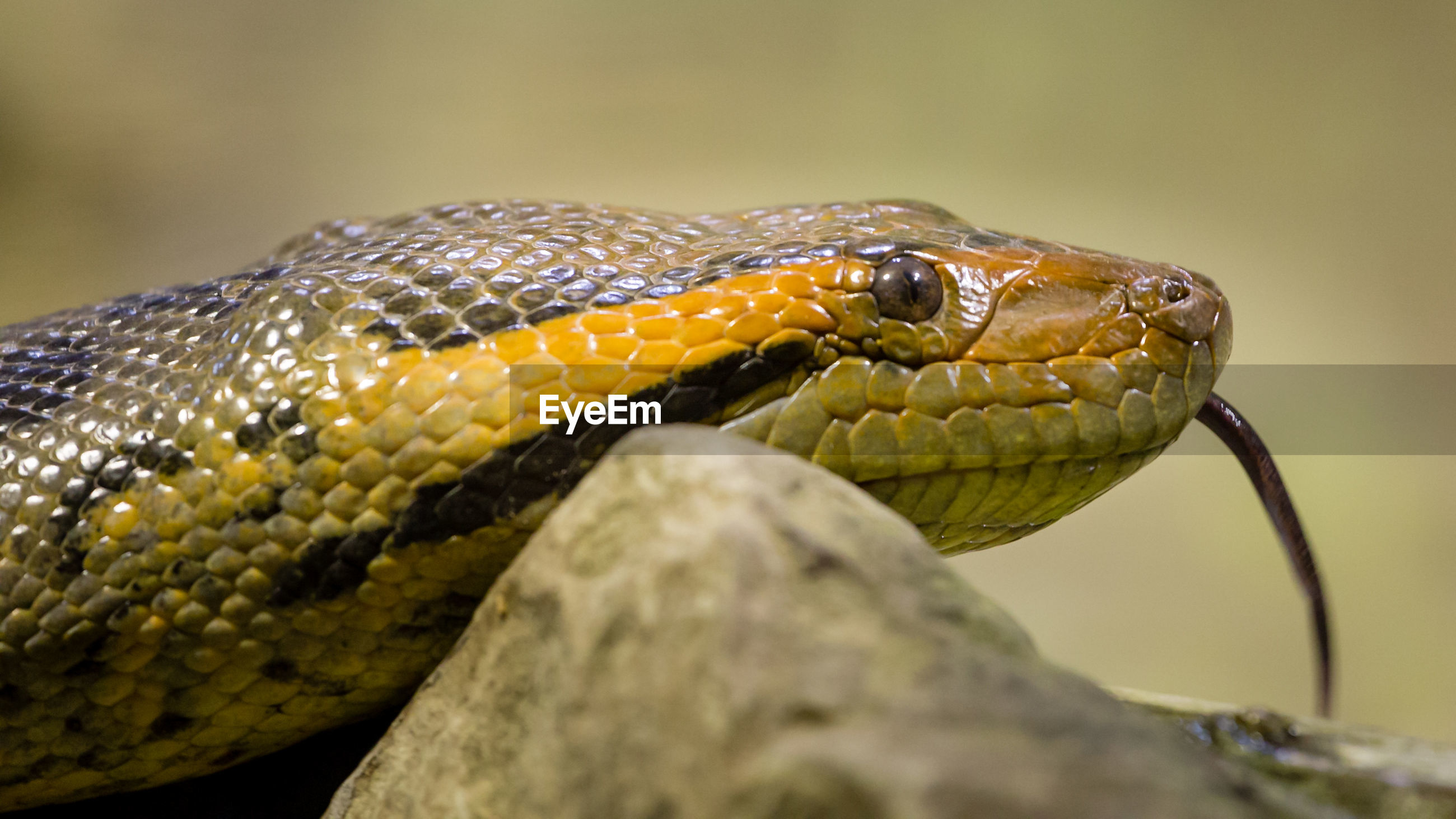 Close-up of snake on rock