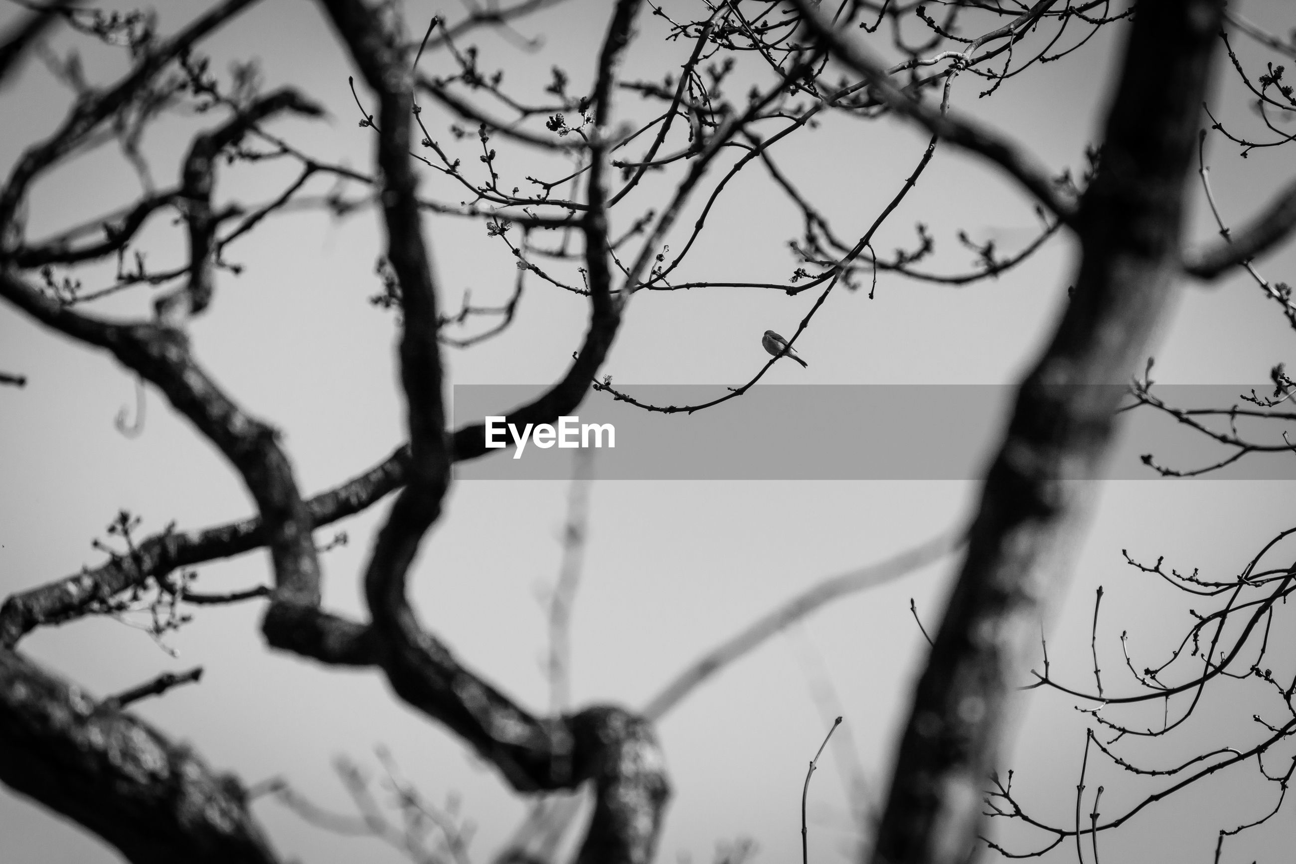 CLOSE-UP OF BARE BRANCHES AGAINST SKY