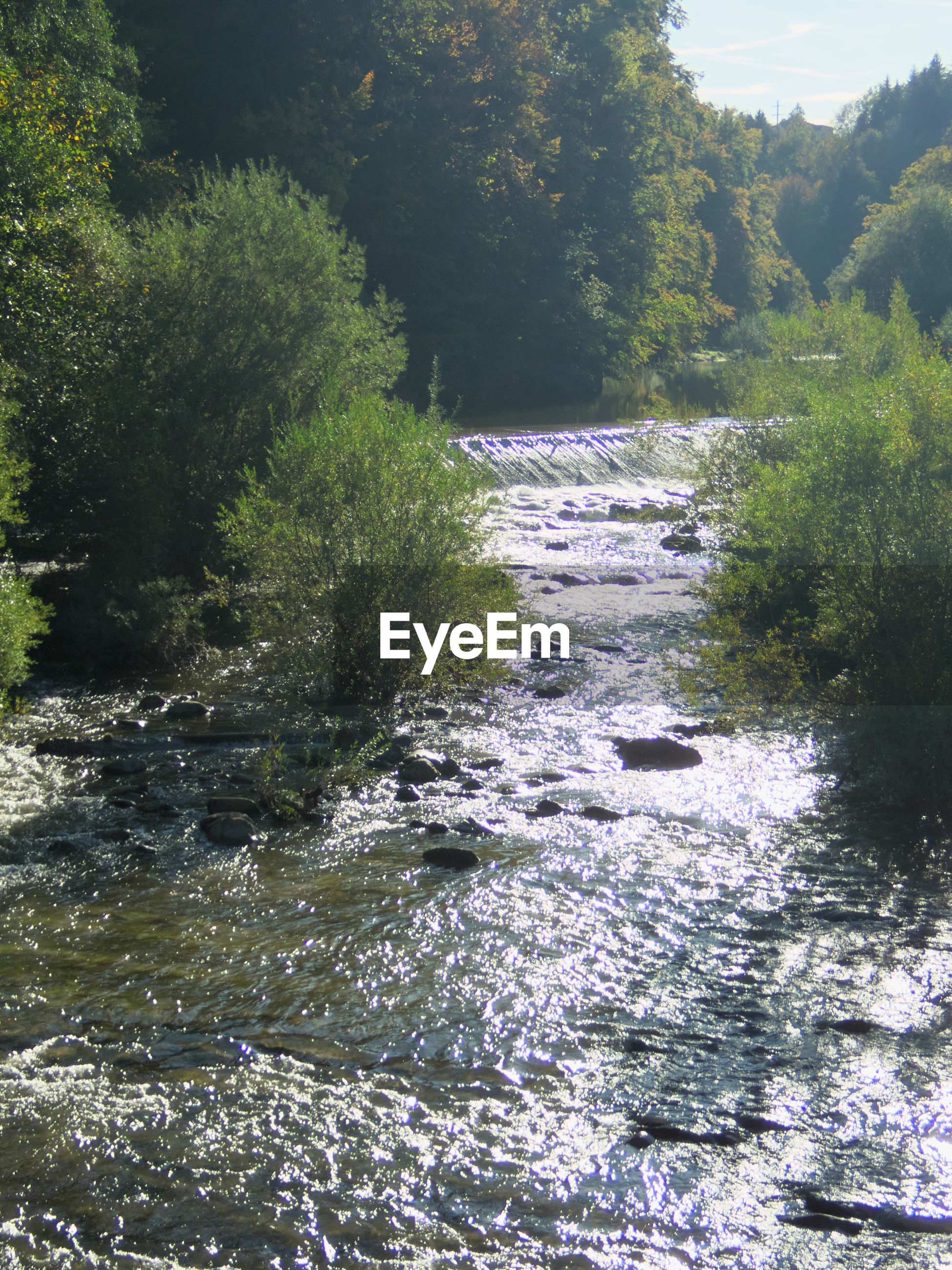 SCENIC VIEW OF RIVER AMIDST TREES IN FOREST