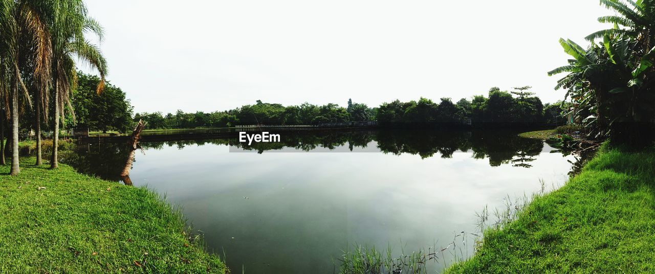 water, tree, nature, reflection, tranquil scene, tranquility, lake, beauty in nature, green color, scenics, no people, growth, outdoors, day, grass, lush foliage, plant, clear sky, landscape, sky