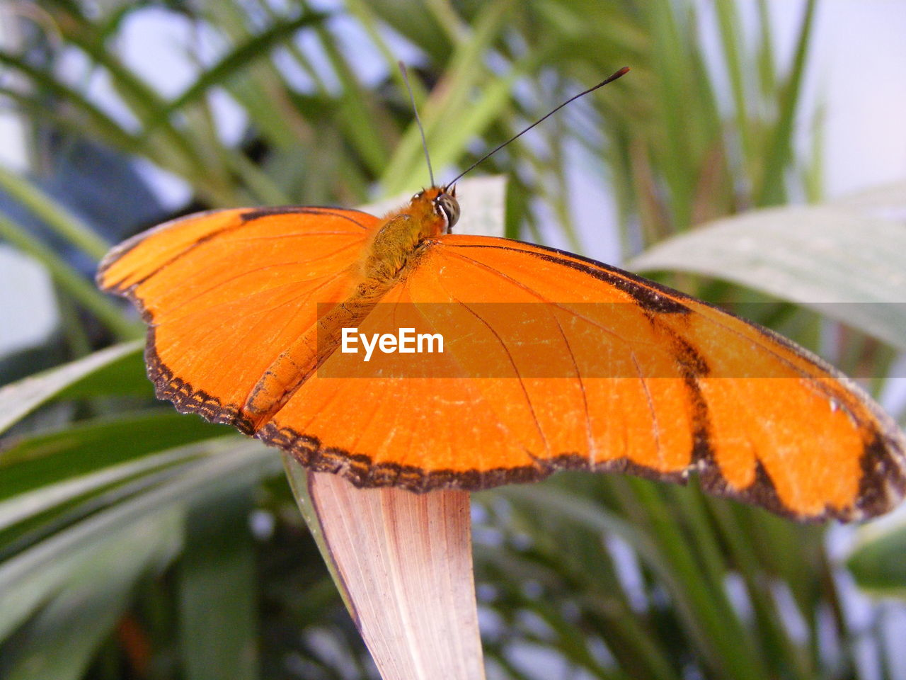 Close-Up Of Orange Butterfly On Leaf