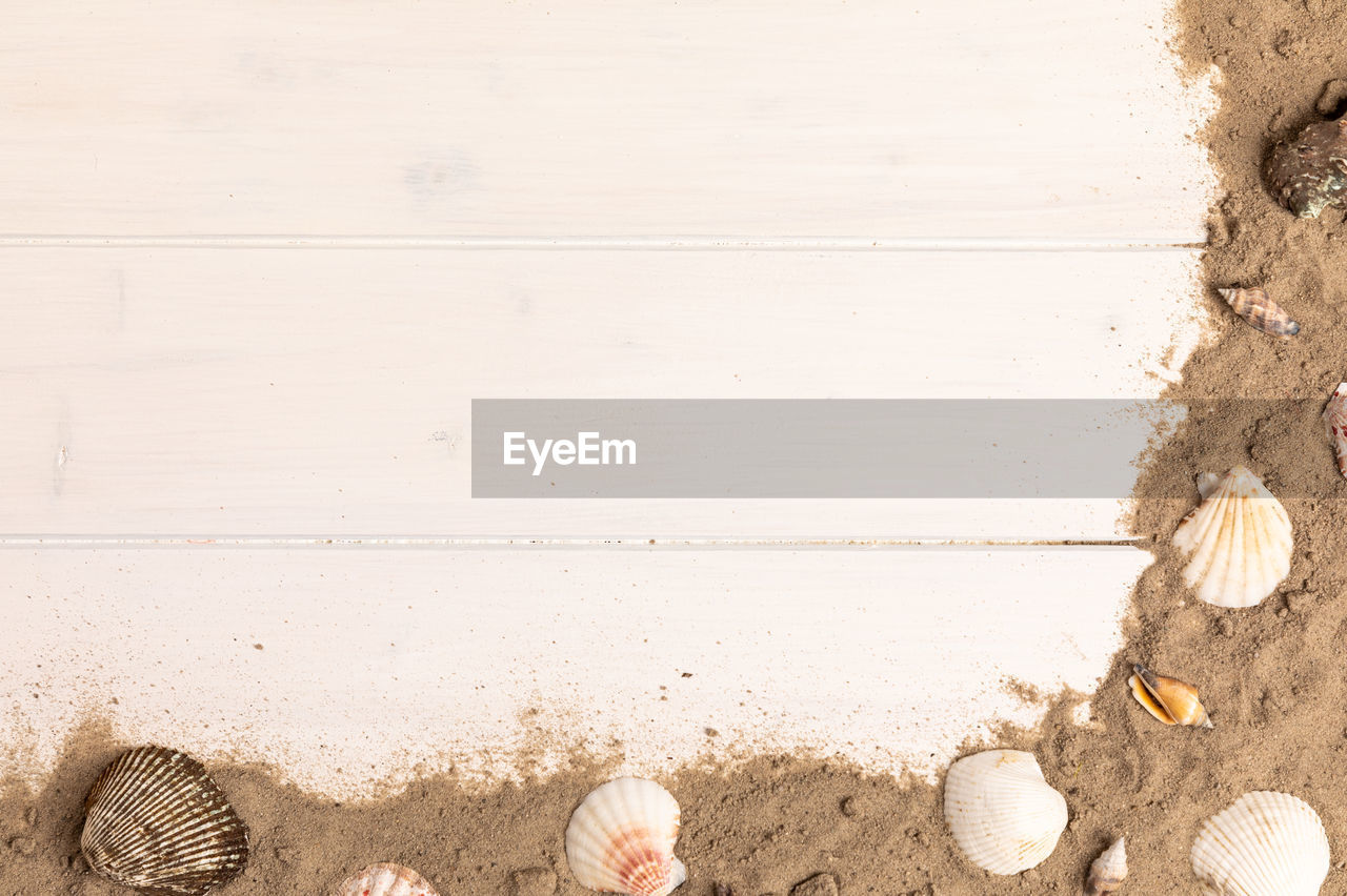 wood - material, land, beach, sand, no people, nature, seashell, day, outdoors, close-up, shell, directly above, shoe, water, still life, sea, holiday, white color, copy space, high angle view