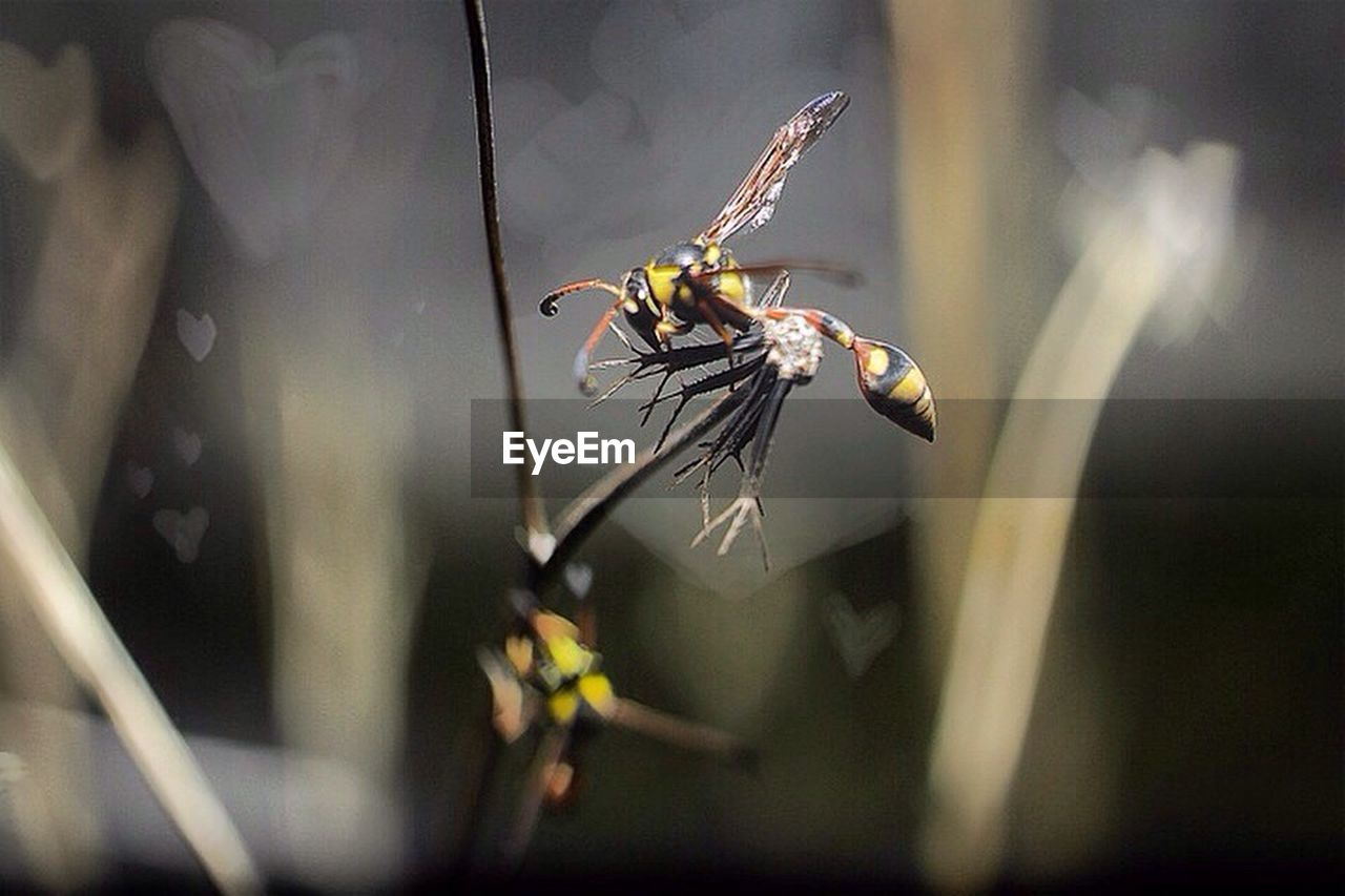 insect, animal themes, animals in the wild, one animal, no people, day, outdoors, animal wildlife, nature, close-up, flower