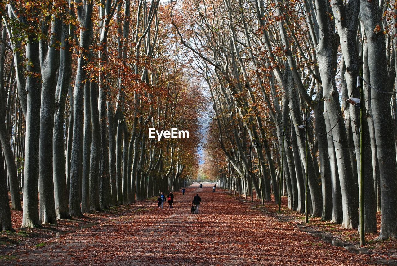 People Walking In Park Amidst Trees