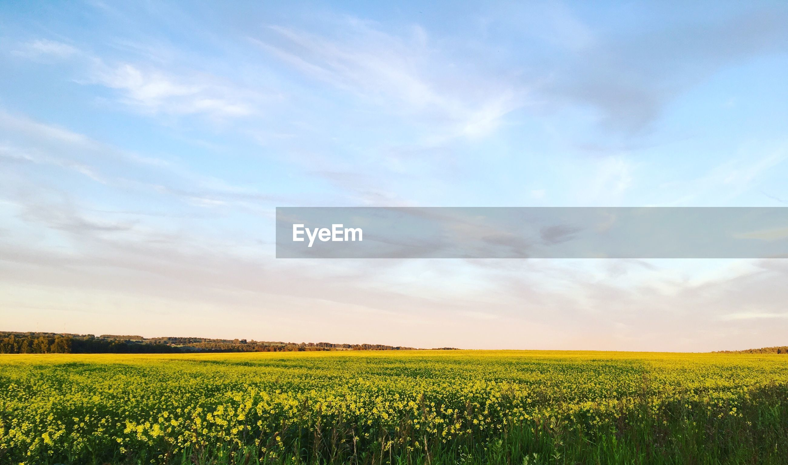 SCENIC VIEW OF CROP FIELD AGAINST SKY