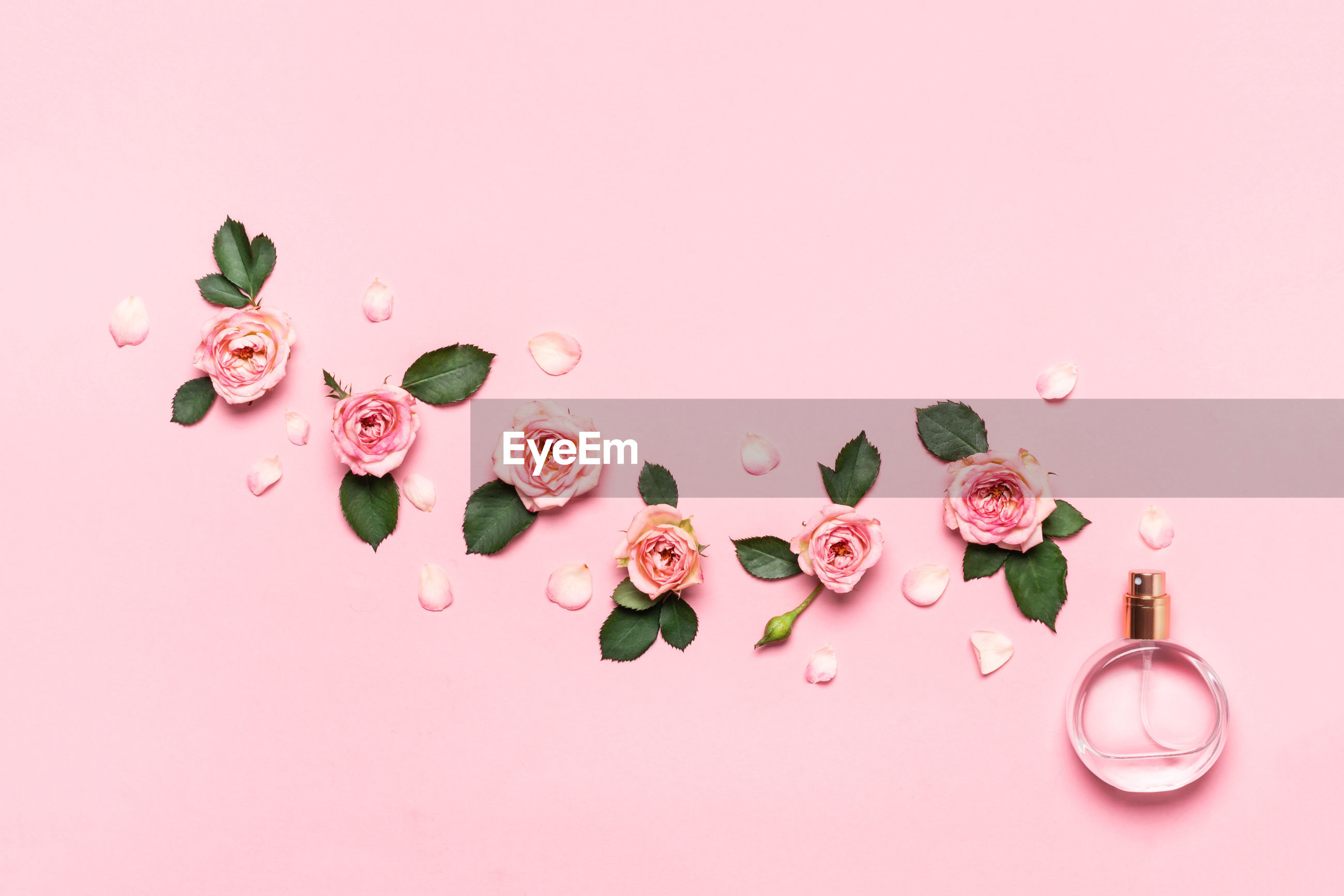 HIGH ANGLE VIEW OF PINK ROSES OVER WHITE BACKGROUND