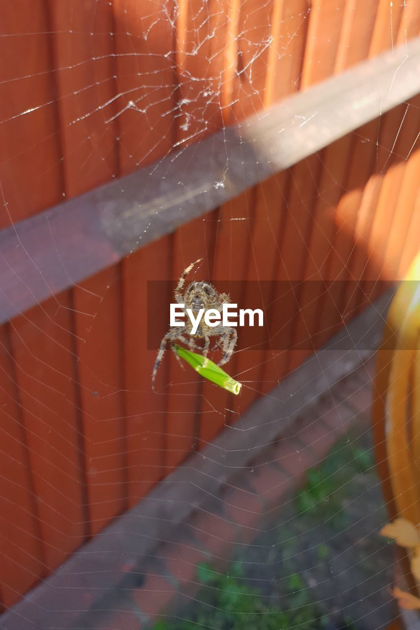 animal themes, one animal, animal wildlife, animal, animals in the wild, spider web, arachnid, arthropod, spider, fragility, invertebrate, insect, day, nature, close-up, no people, zoology, vulnerability, focus on foreground, selective focus, outdoors, animal leg