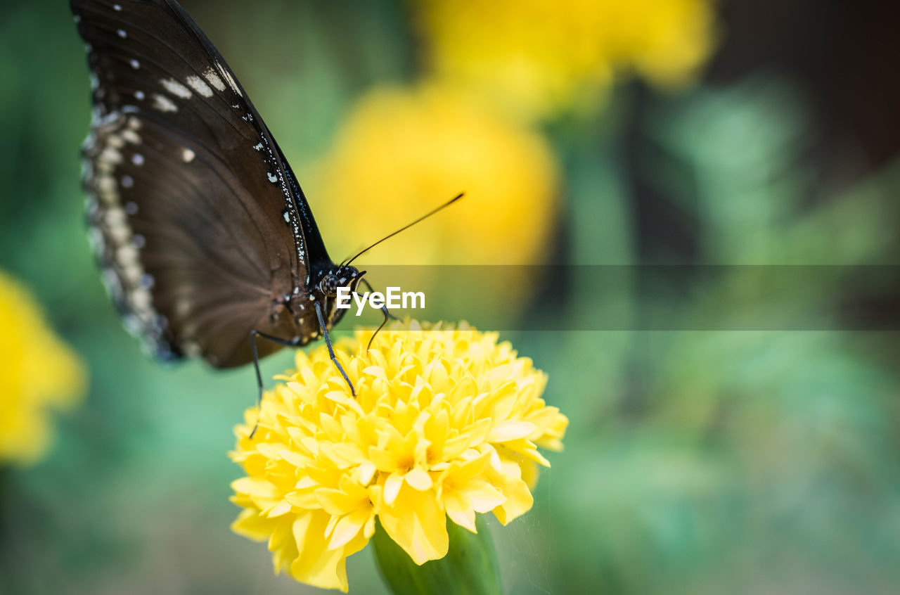 yellow, one animal, flower, animal themes, animals in the wild, insect, focus on foreground, fragility, close-up, petal, beauty in nature, nature, no people, animal wildlife, freshness, outdoors, growth, day, flower head, plant