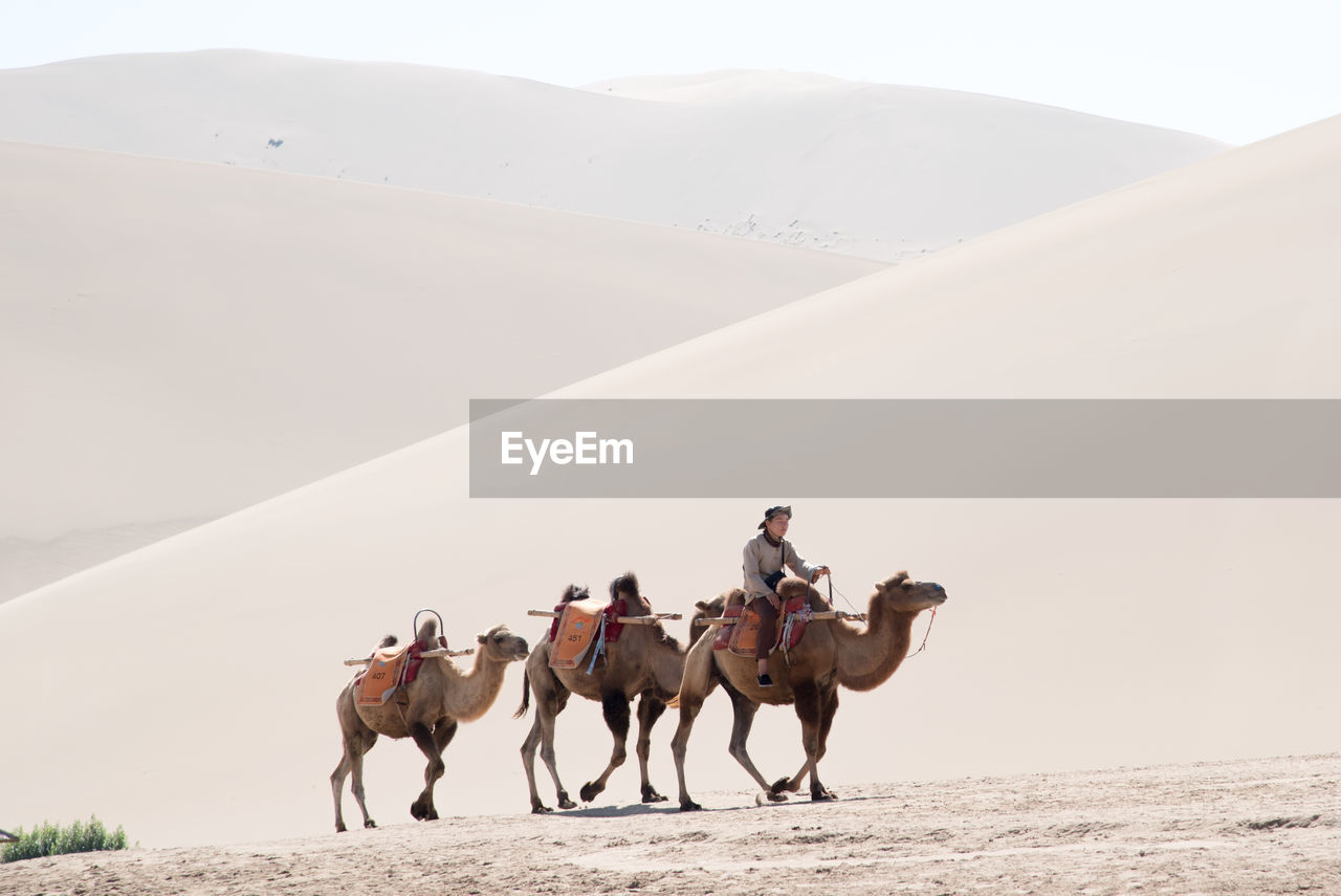 horse, domestic animals, working animal, desert, horseback riding, sand, mammal, men, day, livestock, real people, outdoors, nature, sand dune, mountain, sky, people