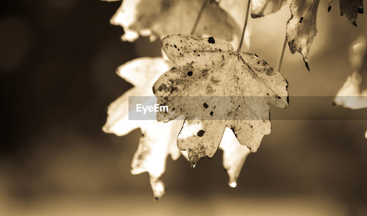 focus on foreground, close-up, dry, no people, nature, outdoors, leaf, day