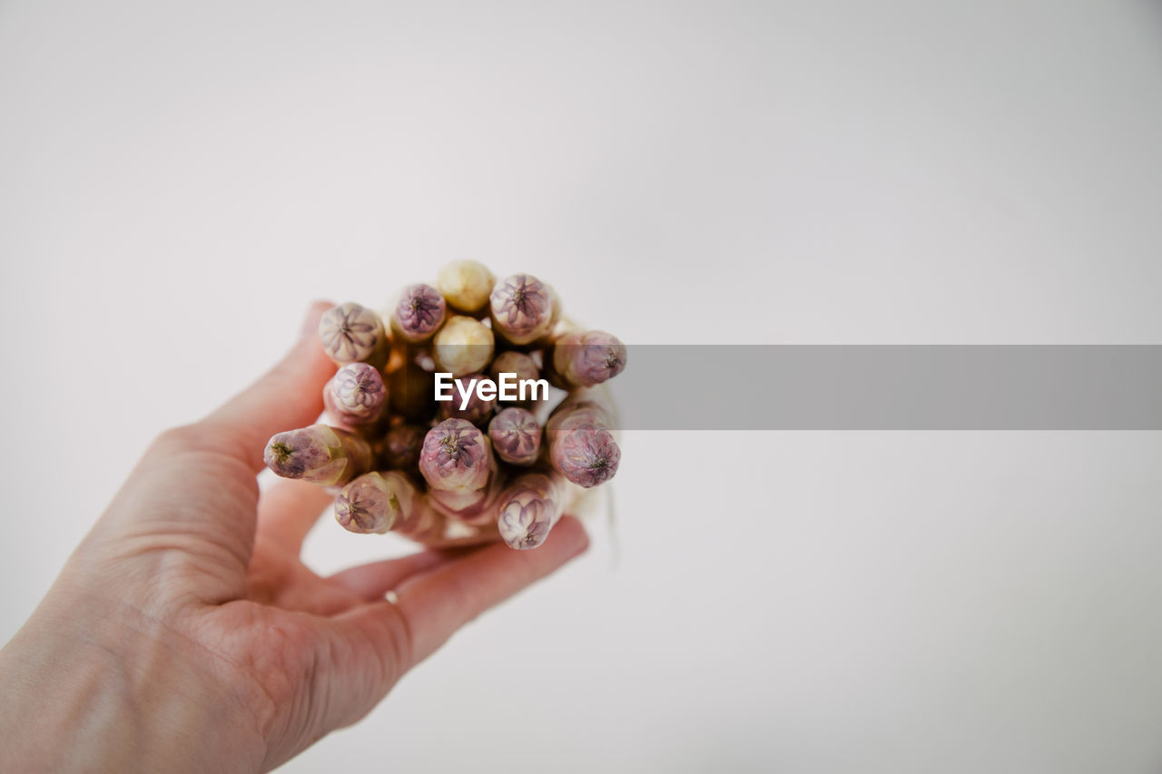 MIDSECTION OF PERSON HOLDING FRUITS